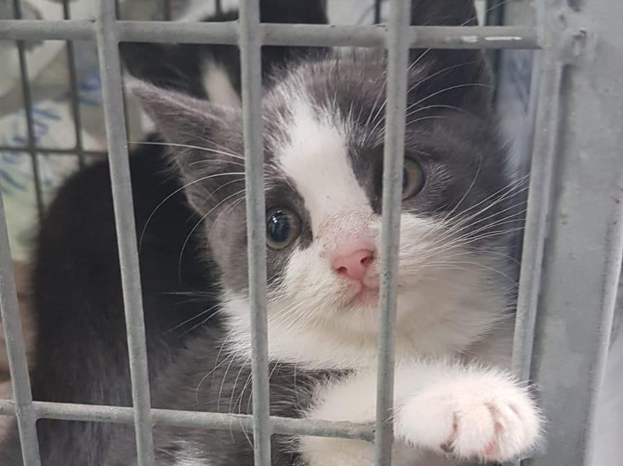 Dierenopvang Schagen Hollands Kroon moet voor het eerst in jaren weer groepen zwerfkatten vangen: 'Een kitten was zo ziek, snot en heel veel vlooien. We houden ons hart vast voor de rest'