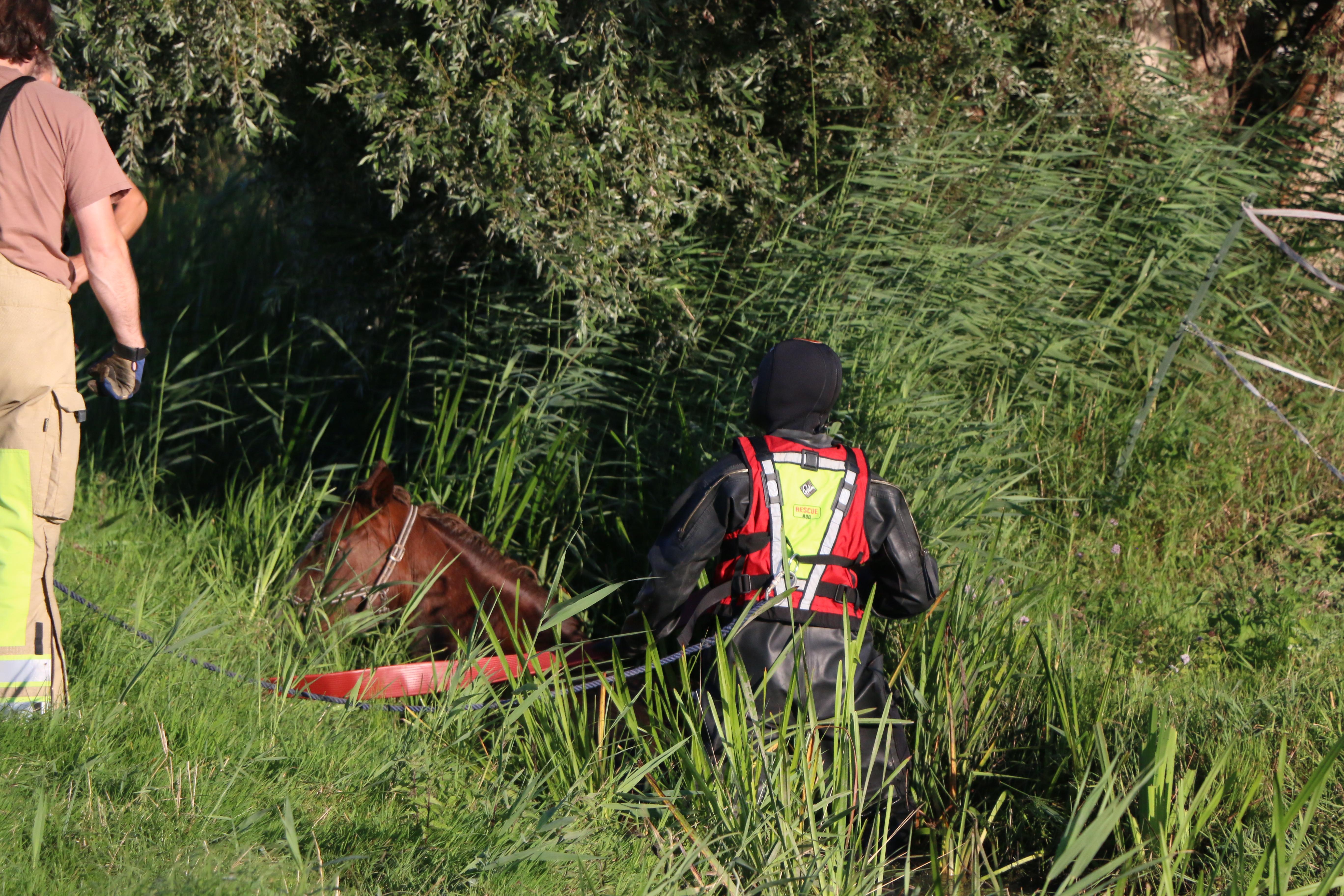 Brandweer Nederhorst den Berg haalt onfortuinlijk paard uit sloot