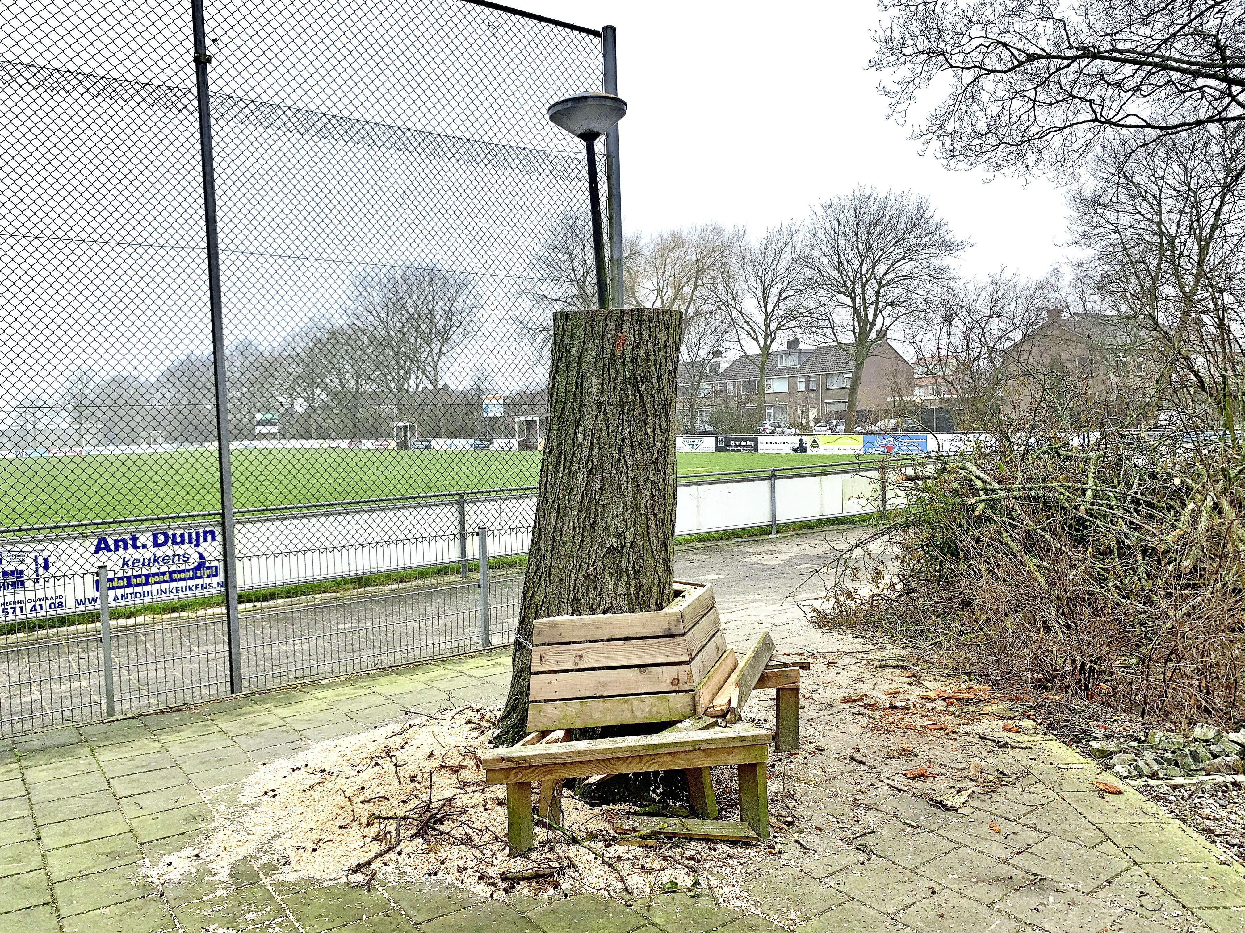 'Die boom krijgen we meer terug.' Gemeente Heerhugowaard hoopt op snelle oplossing na kappen stervende boom die nog springlevend was