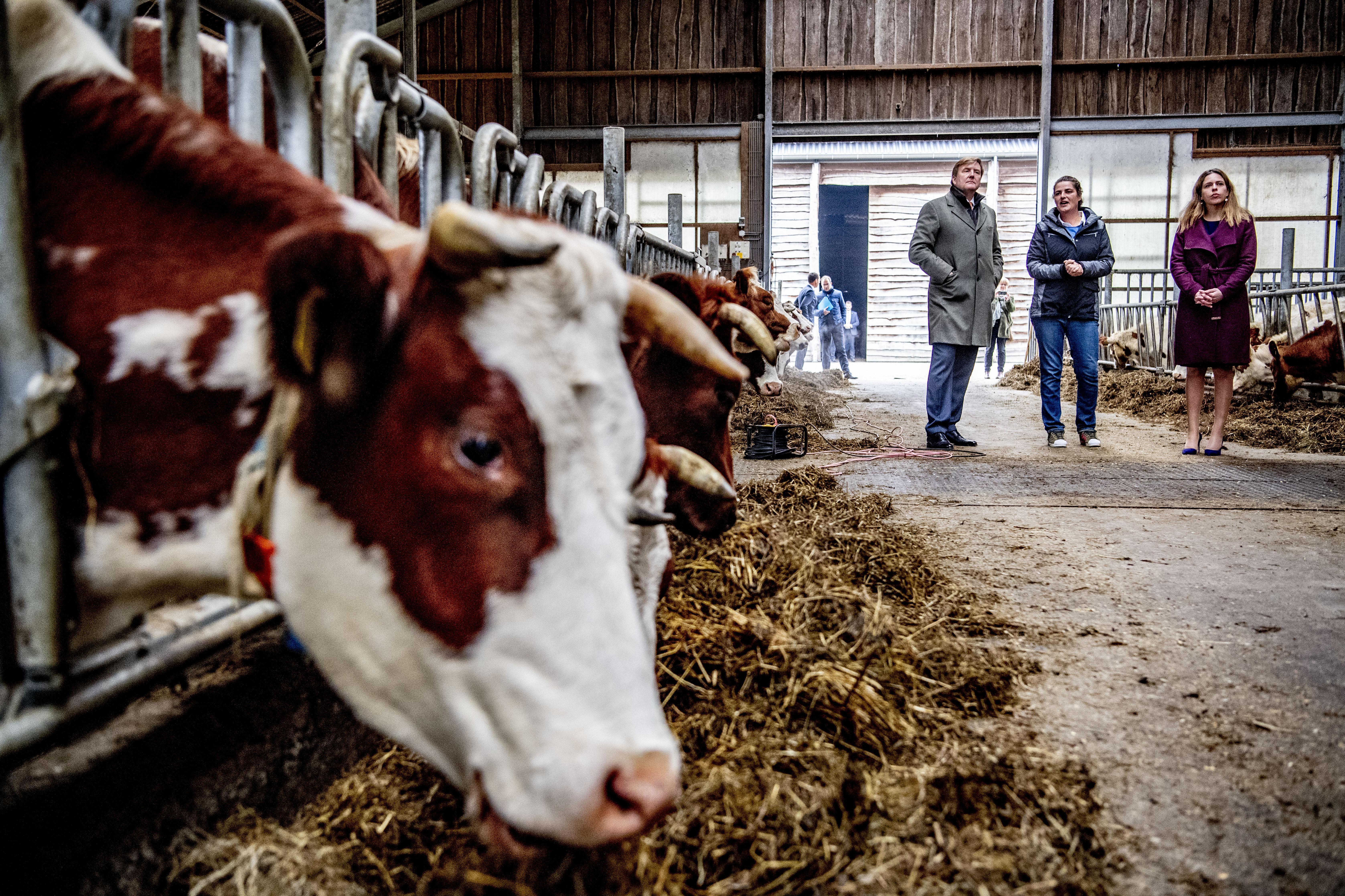 Kom op, vat de koe bij de hoorns minister Schouten. Maak werk van 'kringlooplandbouw' | column Groen gaat Groen