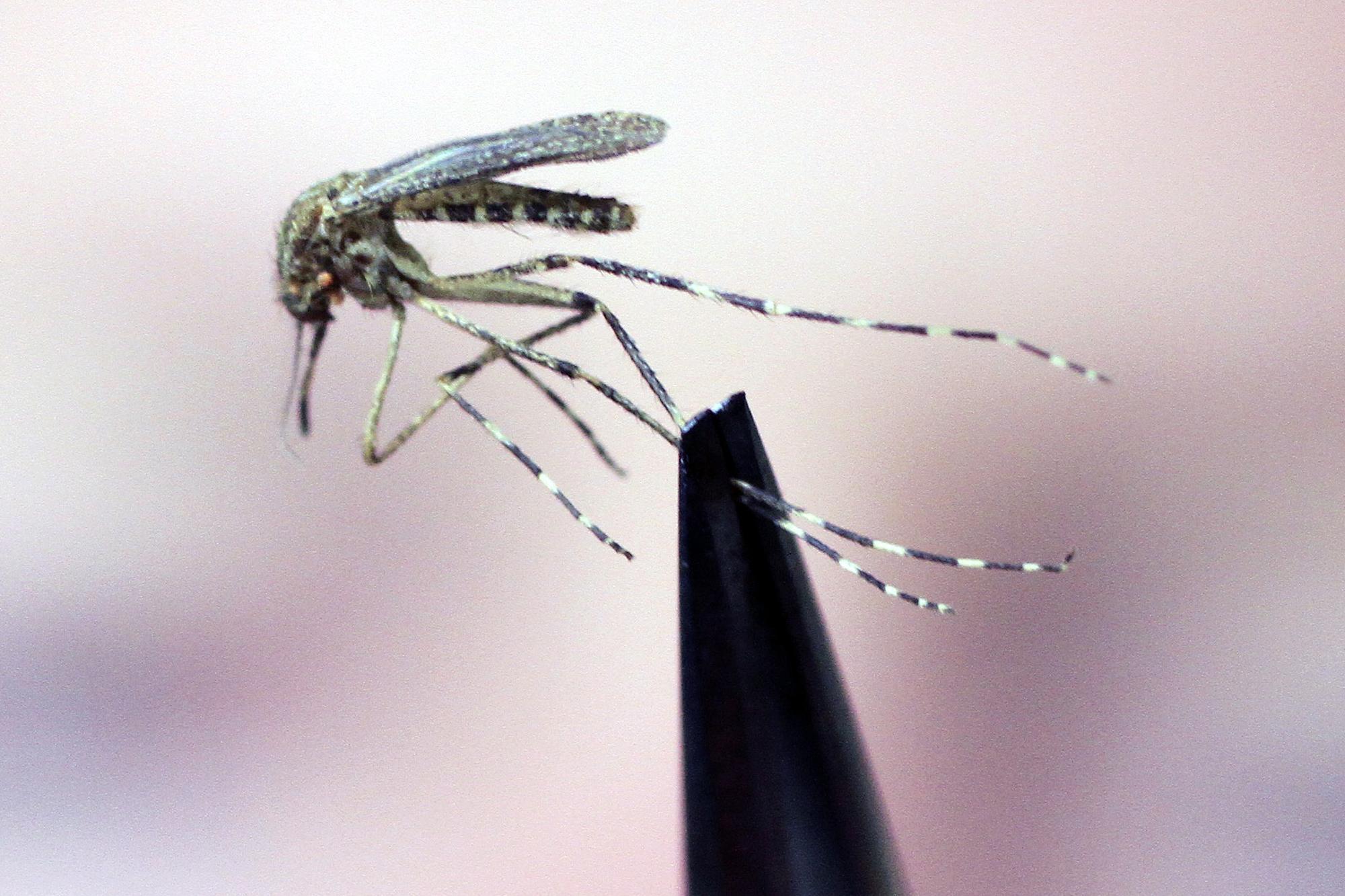 Westnijlvirus voor het eerst in Nederland gesignaleerd