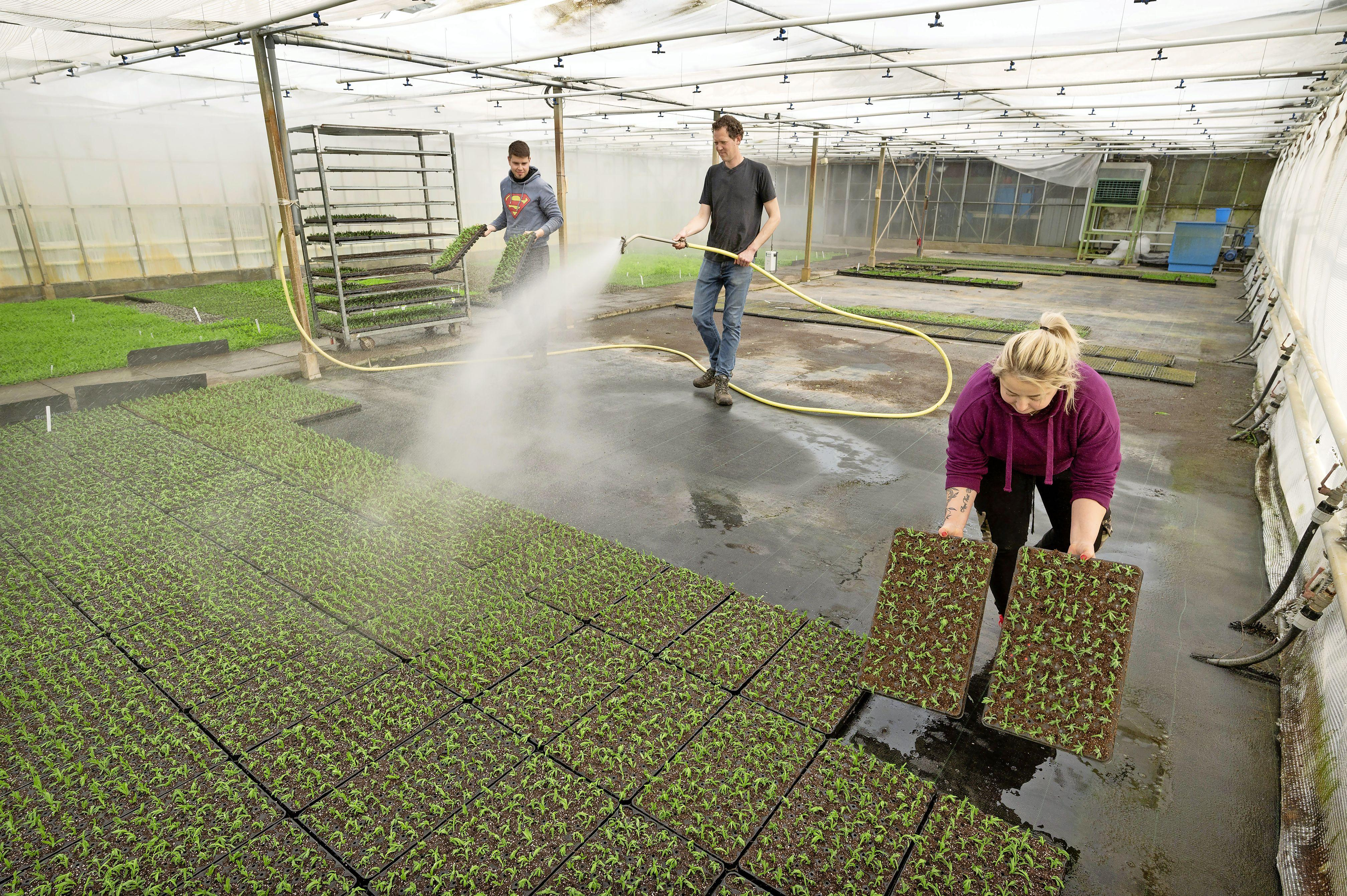 Loeren bij de boeren: Stekken vertroetelen in een kas met tropisch klimaat