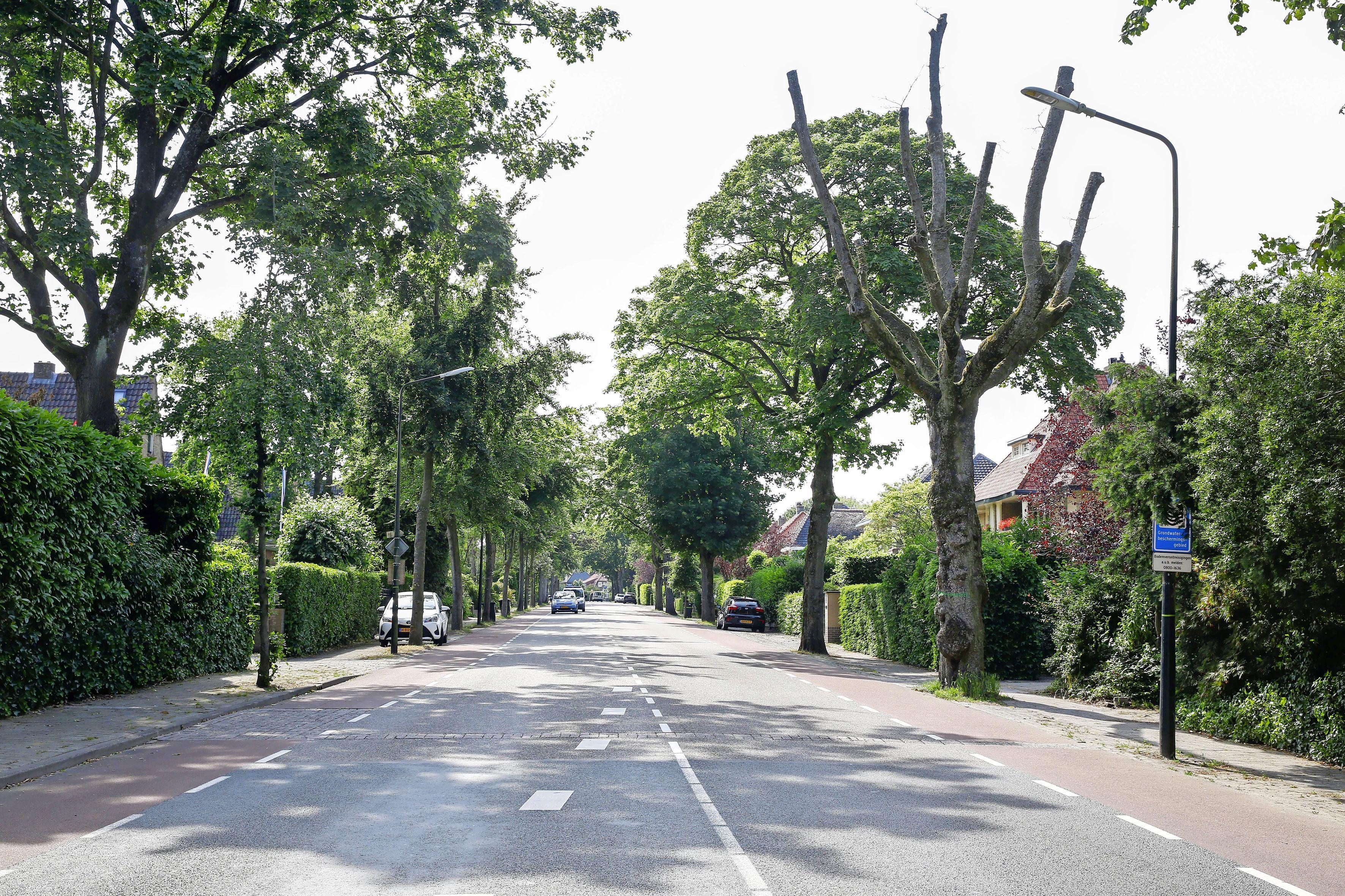 'De laanstructuur van de Nieuwe Bussummerweg in Huizen is historie en moet behouden blijven'. Ondertussen verdwijnen de afgelopen 20 jaar alleen maar bomen
