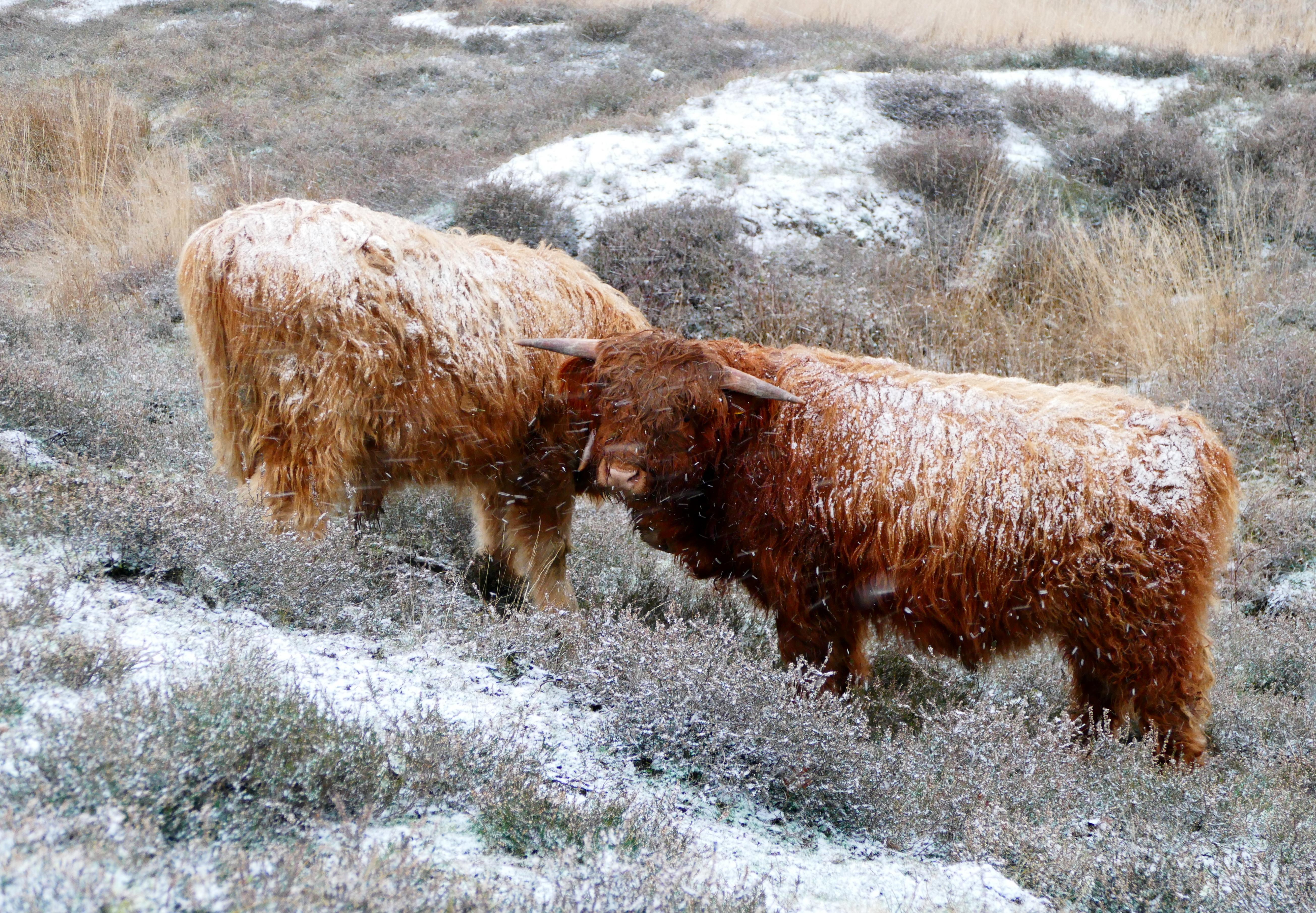 Mooie foto's van de sneeuw gemaakt? Stuur ze op naar de redactie; bekijk hier alvast enkele inzendingen