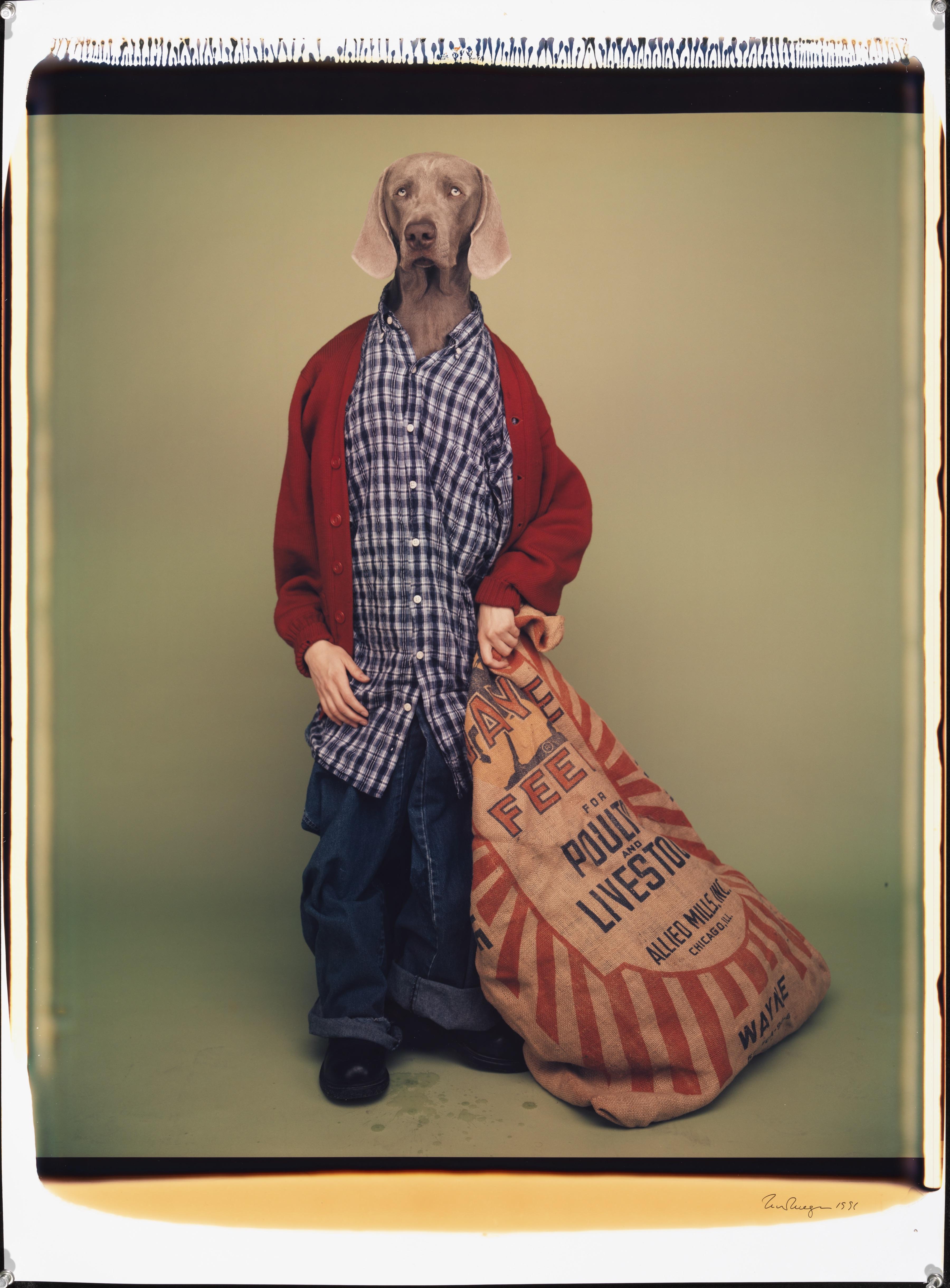 Kwispelen bij de tentoonstelling van William Wegman in Haags Fotomuseum
