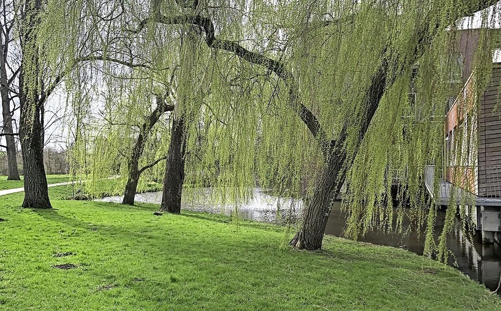 50 tinten groen: gemeenten hebben 'groen' hoog op de agenda staan. Zijn wijken in Waterland en Zaanstreek groen genoeg, of kan het beter?