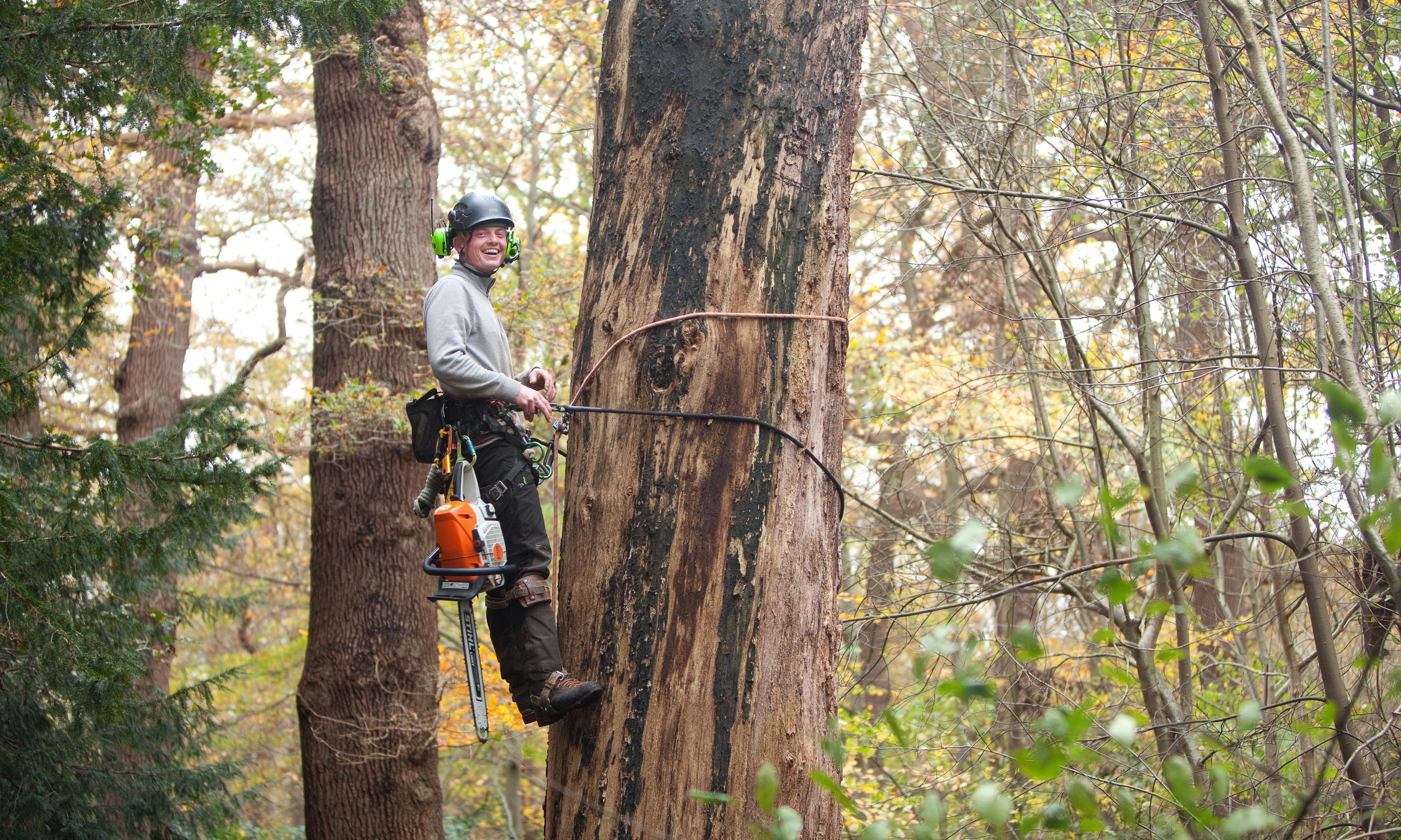 Je zou Tom van Oosterom een professioneel boomklimmer kunnen noemen: 'Iedere sukkel kan een tak afzagen, de kunst is alles eromheen heel houden'