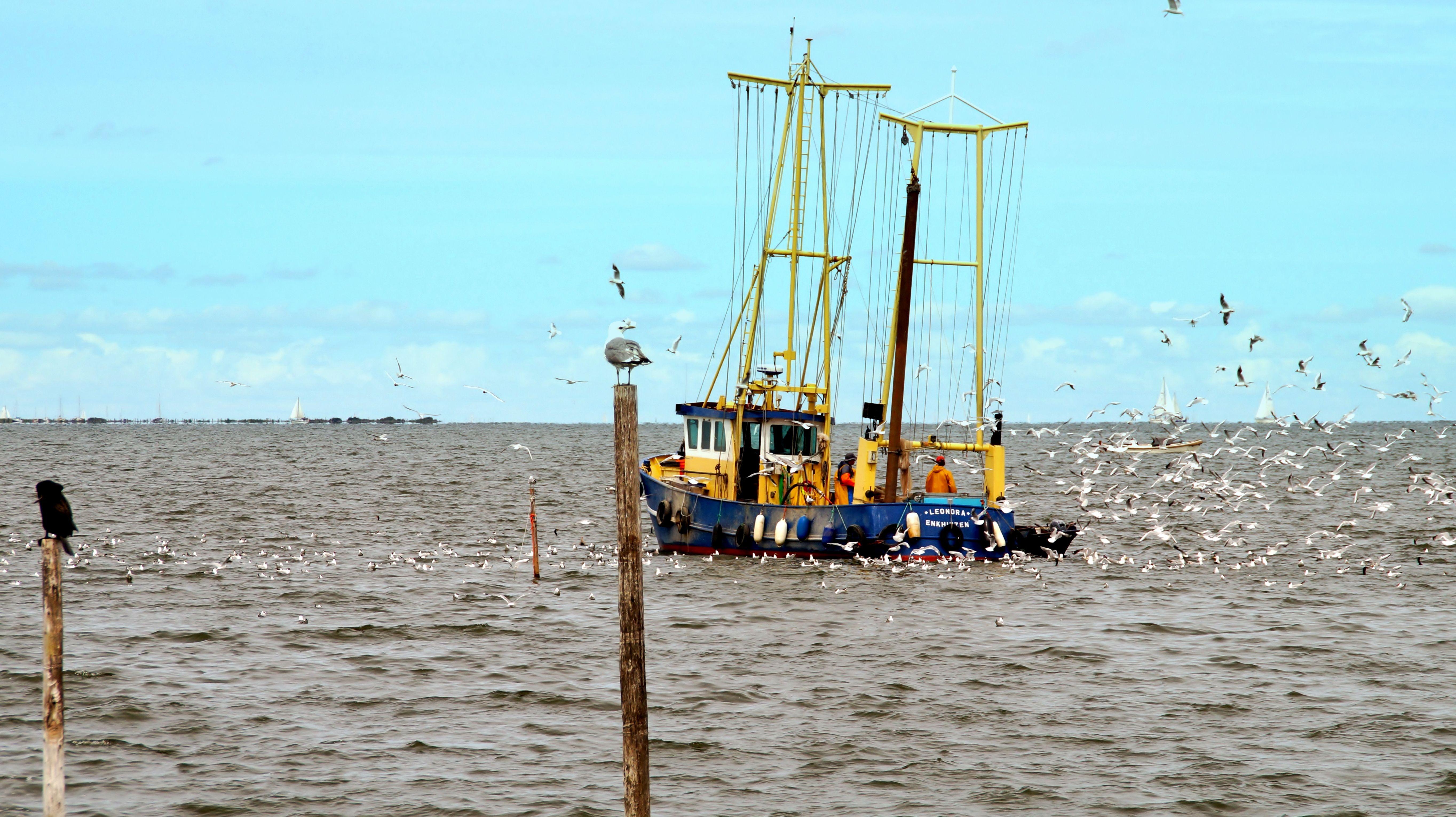 Ze zitten in Andijk écht niet te wachten op moerasgebied in het IJsselmeer. En dat zullen ze Rijkswaterstaat laten weten