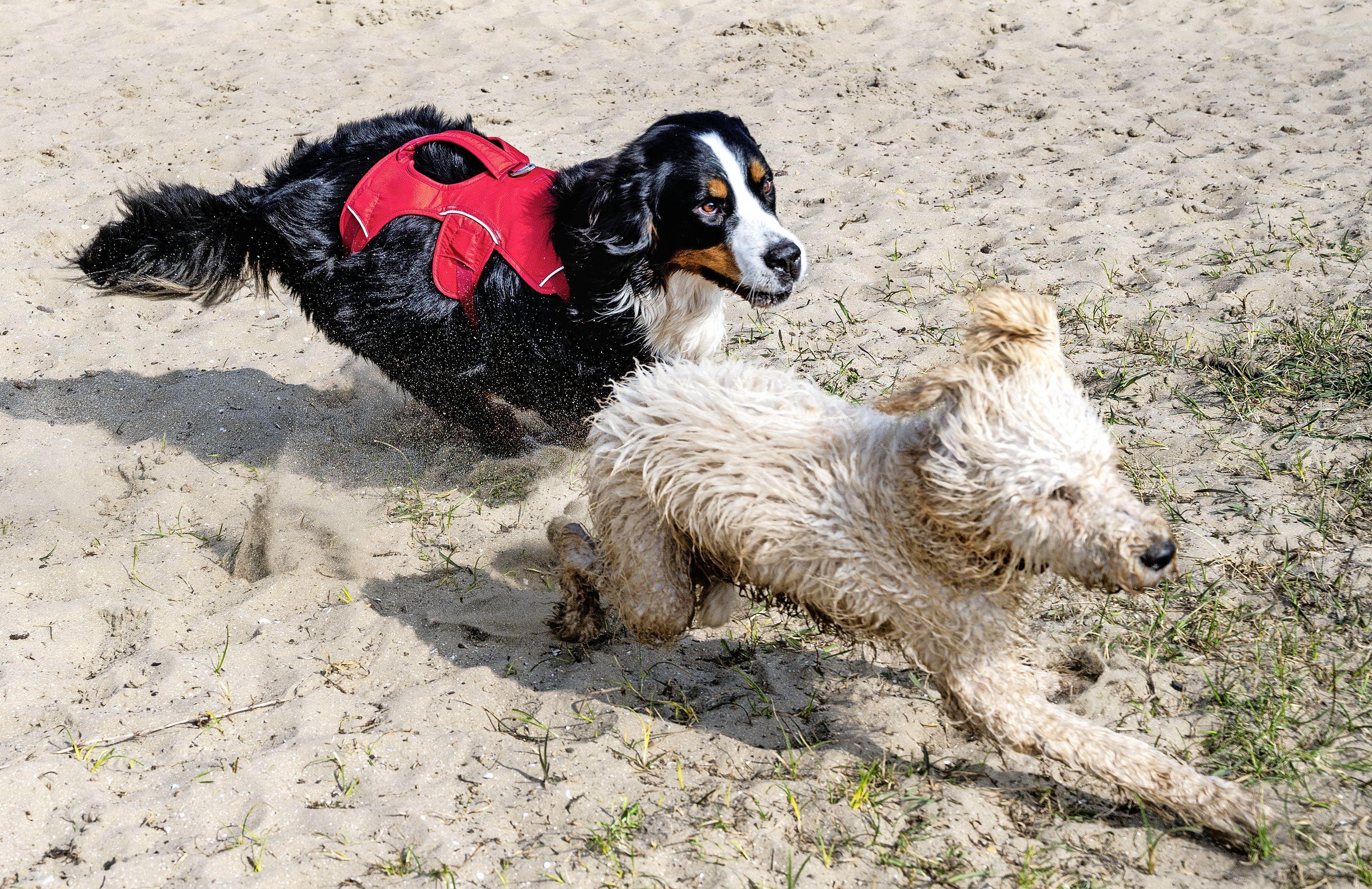 Motie en emotie over aanlijnplicht honden Bloemendaal