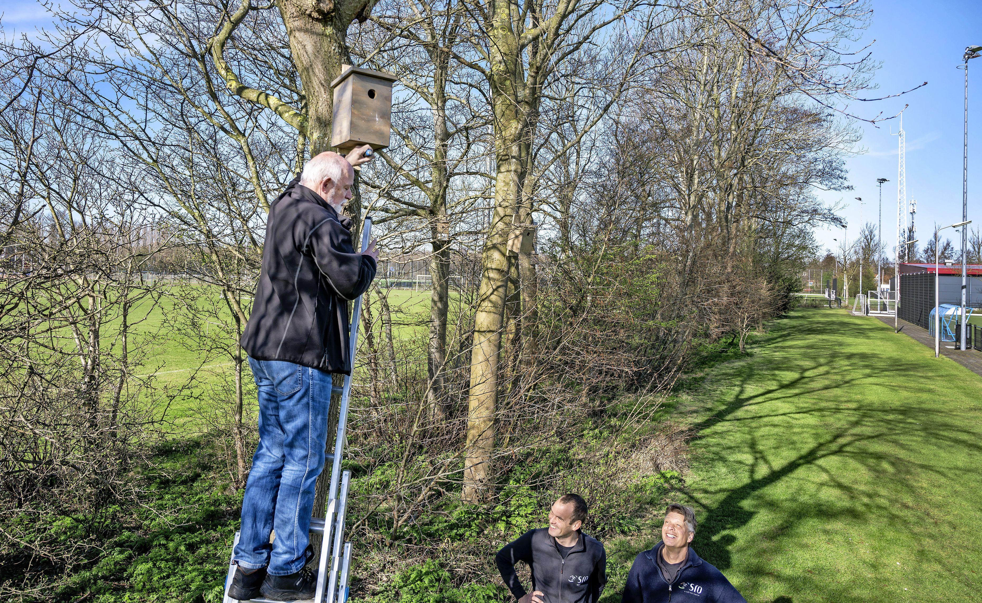 Tientallen nestkastjes opgehangen in bomen rond sportcomplexen. 'Hulptroepen' houden velden vrij van engerlingen