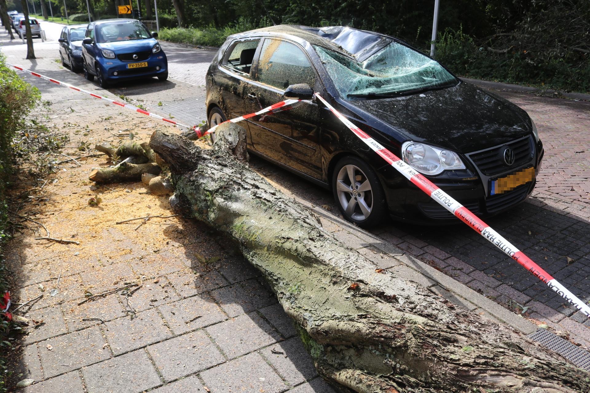 Boom valt op auto in Katwijk; voertuig total loss