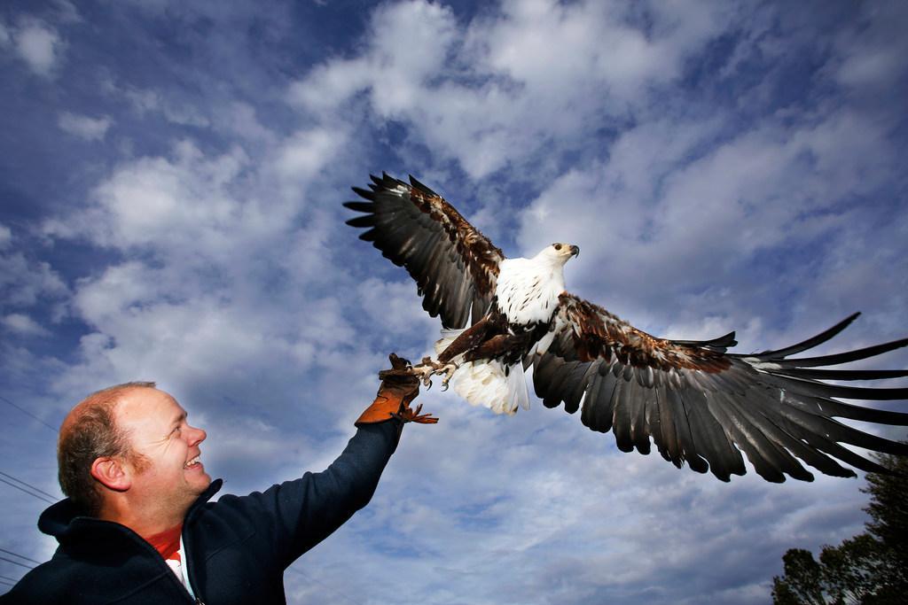 Bank zet streep door lening voor nieuw Bunschoter Roofvogelpark vanwege onzekere coronatijd; 'Ik zat te huilen op de bank, want in een avond regende het 35 annuleringen van demonstraties', zet valkenier Jeroen Settels
