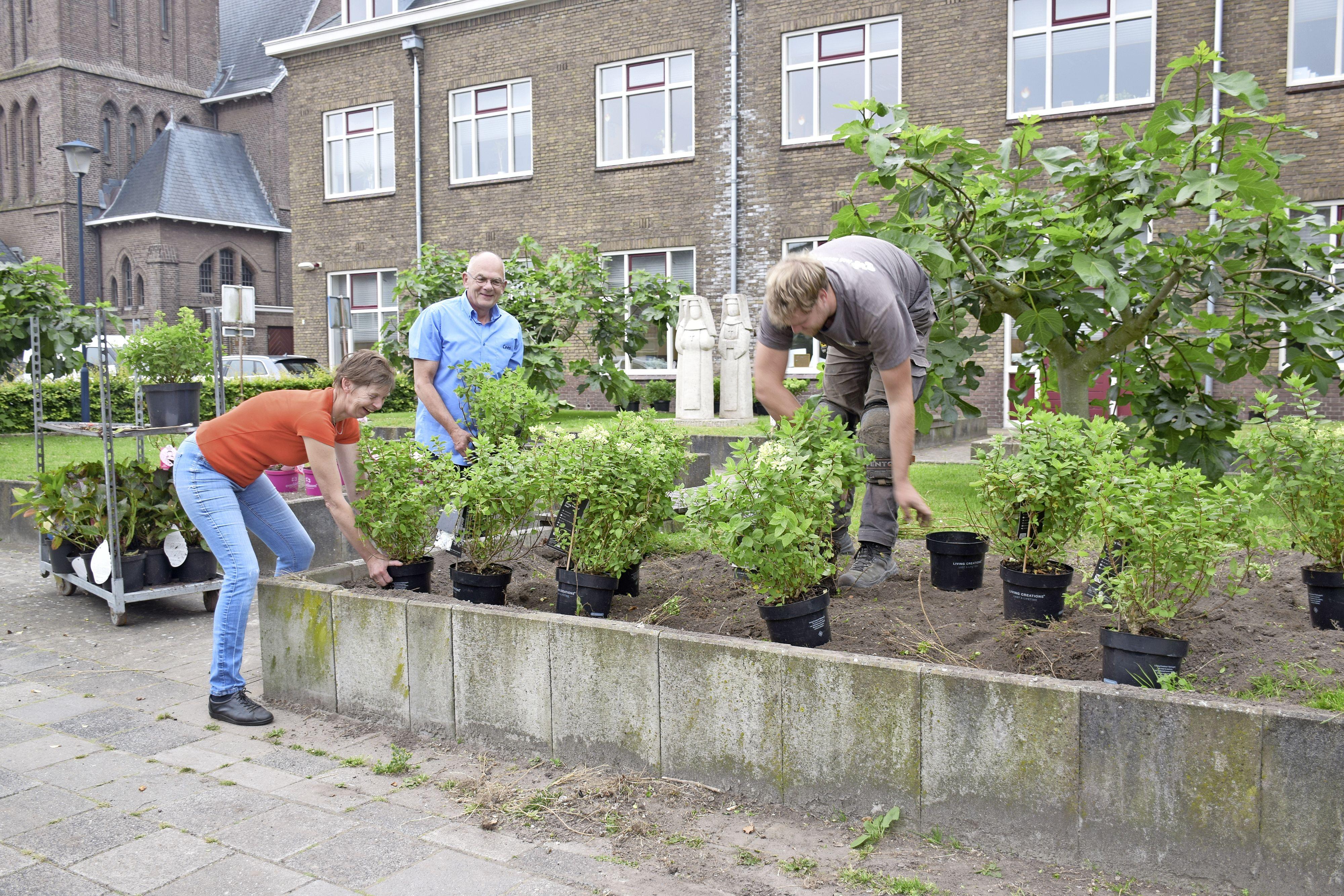 Hortensia's in plaats van buxusmotten. Huize Nicolaas in Lutjebroek is heel blij met goede overbuurman Cees Veenbrink