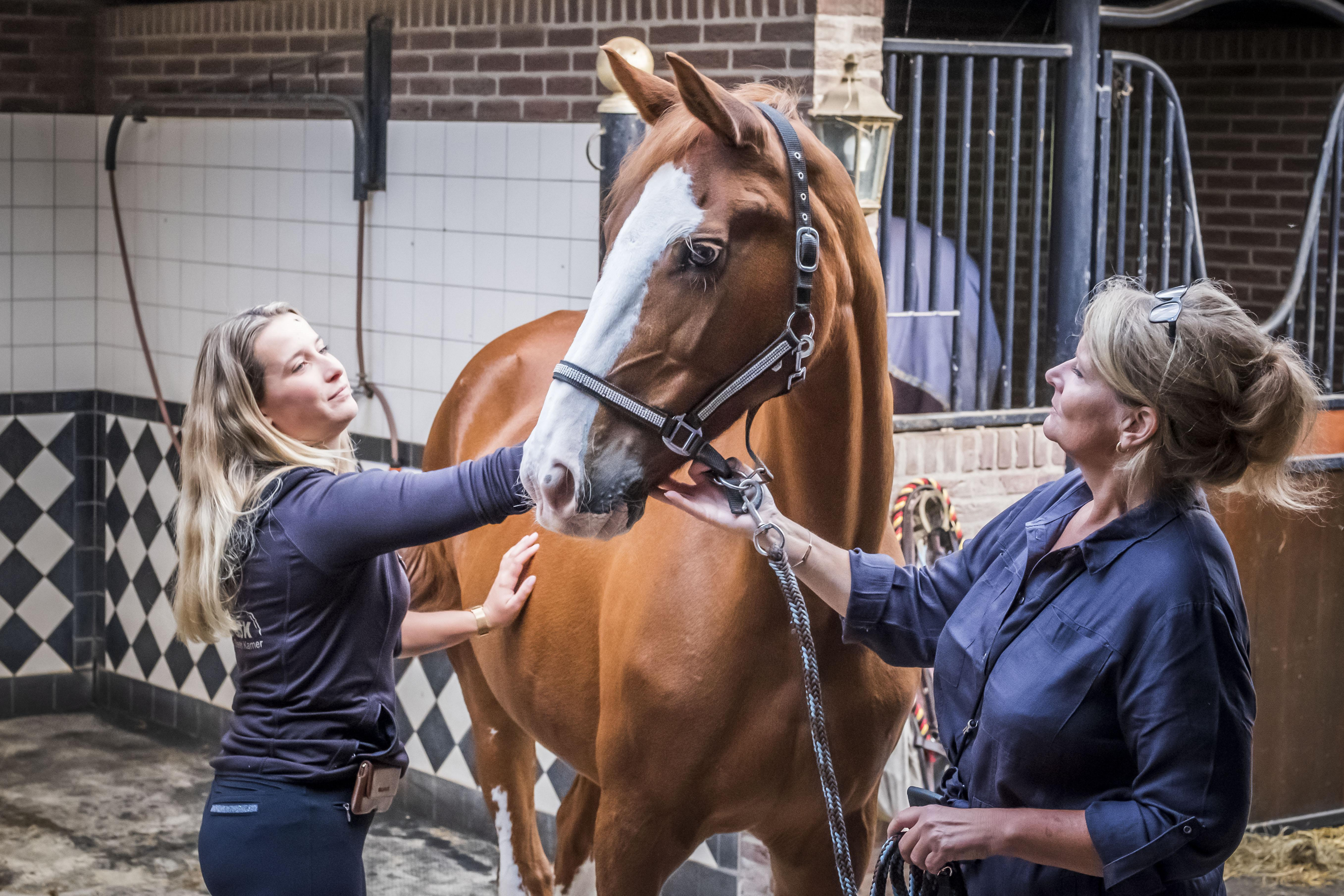 Nog even een kus en een aai over het voorhoofd. Manegepaard Lizzy (25) is toe aan welverdiend paardenpensioen. 'Het is een afscheid met een dubbel gevoel'