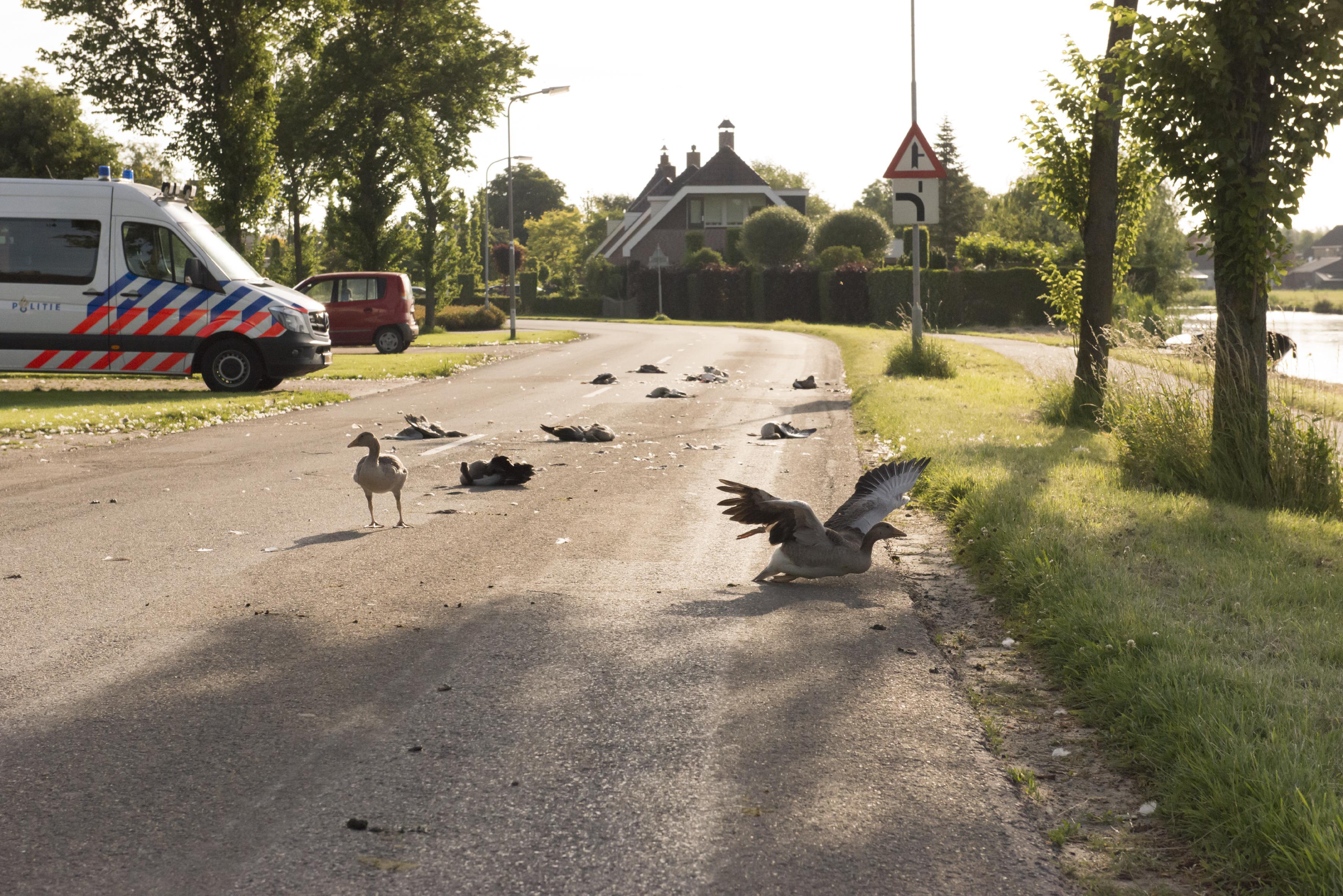 Politie kan dader ganzenslachting Onderdijk nog niet vinden