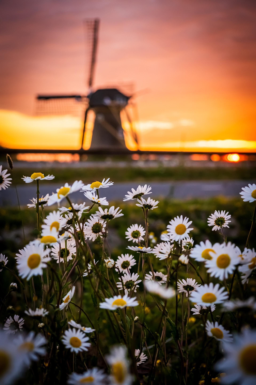 Anke van den Burg schiet het perfecte plaatje van Noordwijk