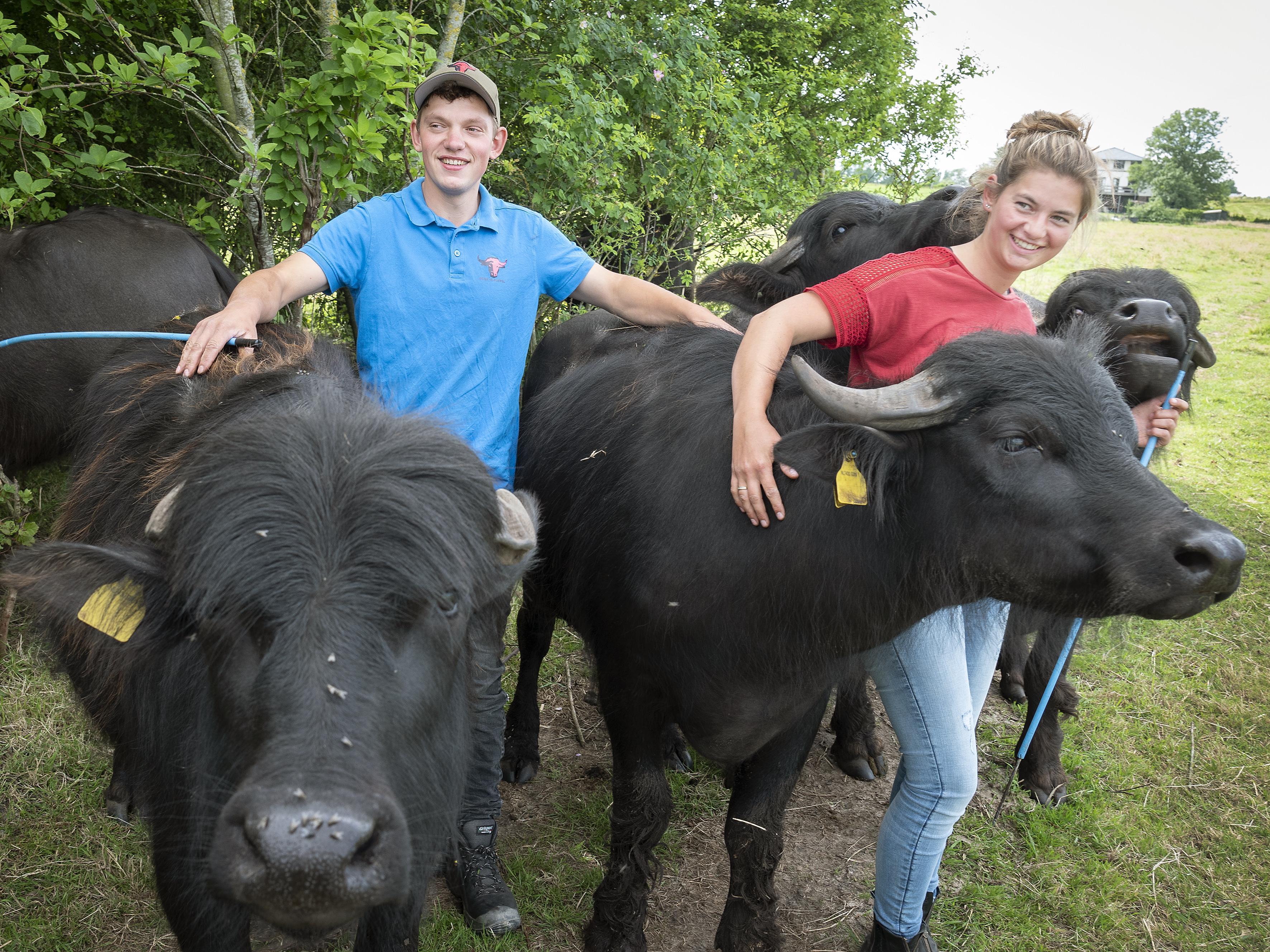 Startende boeren Emma (26) en Olivier (27) pakken de koe bij de hoorns: 'Met onze knuffelige waterbuffels hebben we een unieke formule'