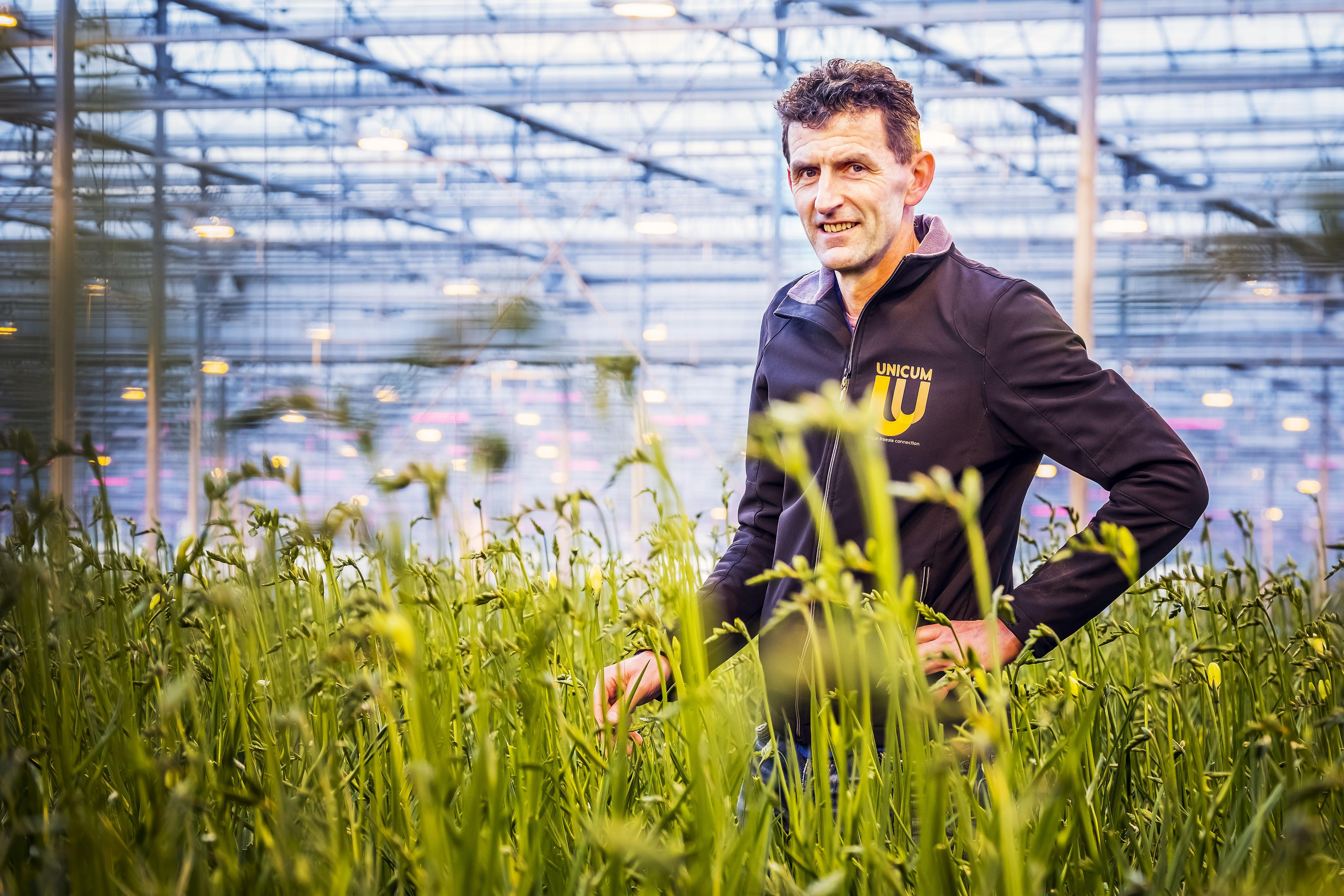 Grootste zonthermieveld van Nederland in glastuingebied Alton in Heerhugowaard: fresia's worden gasloos gekweekt dankzij zonneboilers