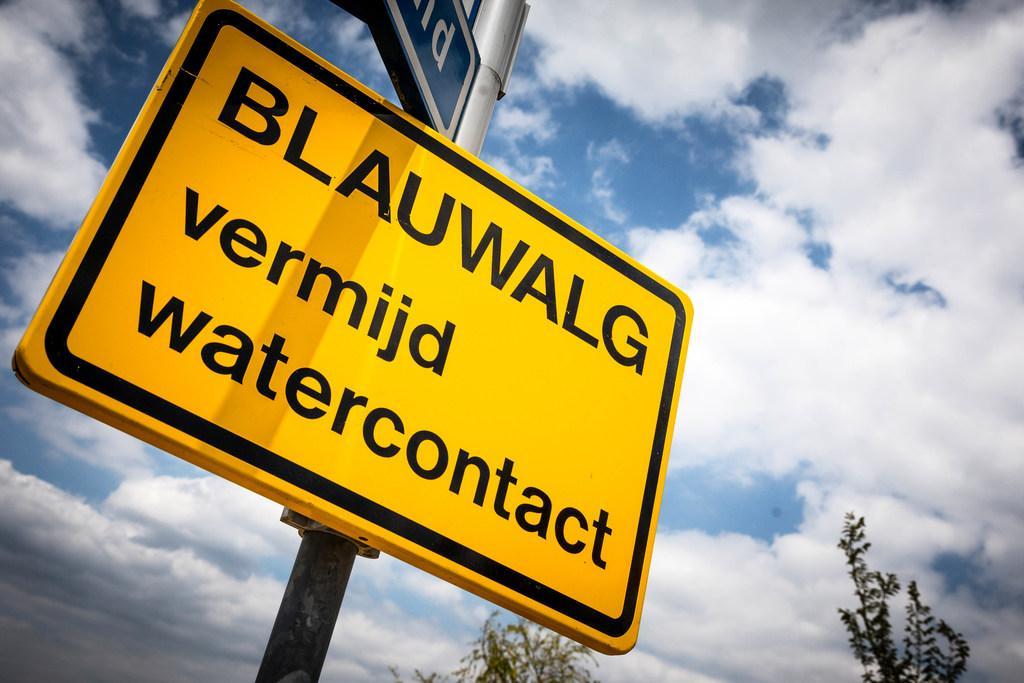 Blauwalg aangetroffen in gedeelte van Alkmaardermeer