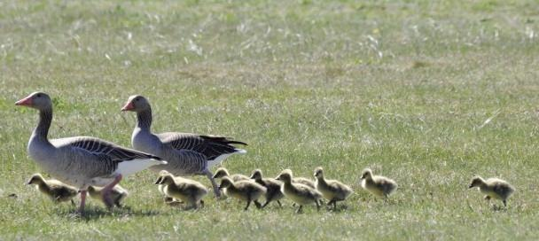 Duincoaches van PWN wijzen natuurbezoekers op de regels tijdens het broedseizoen: 'Blijf jij op het pad, dan blijven de vogels op hun nest'