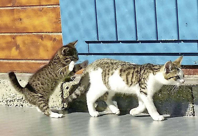 Kattenorganisatie redt zwangere zwerfpoesjes bij vuilbedrijf. 'Een levensgevaarlijke omgeving, vooral voor kittens'