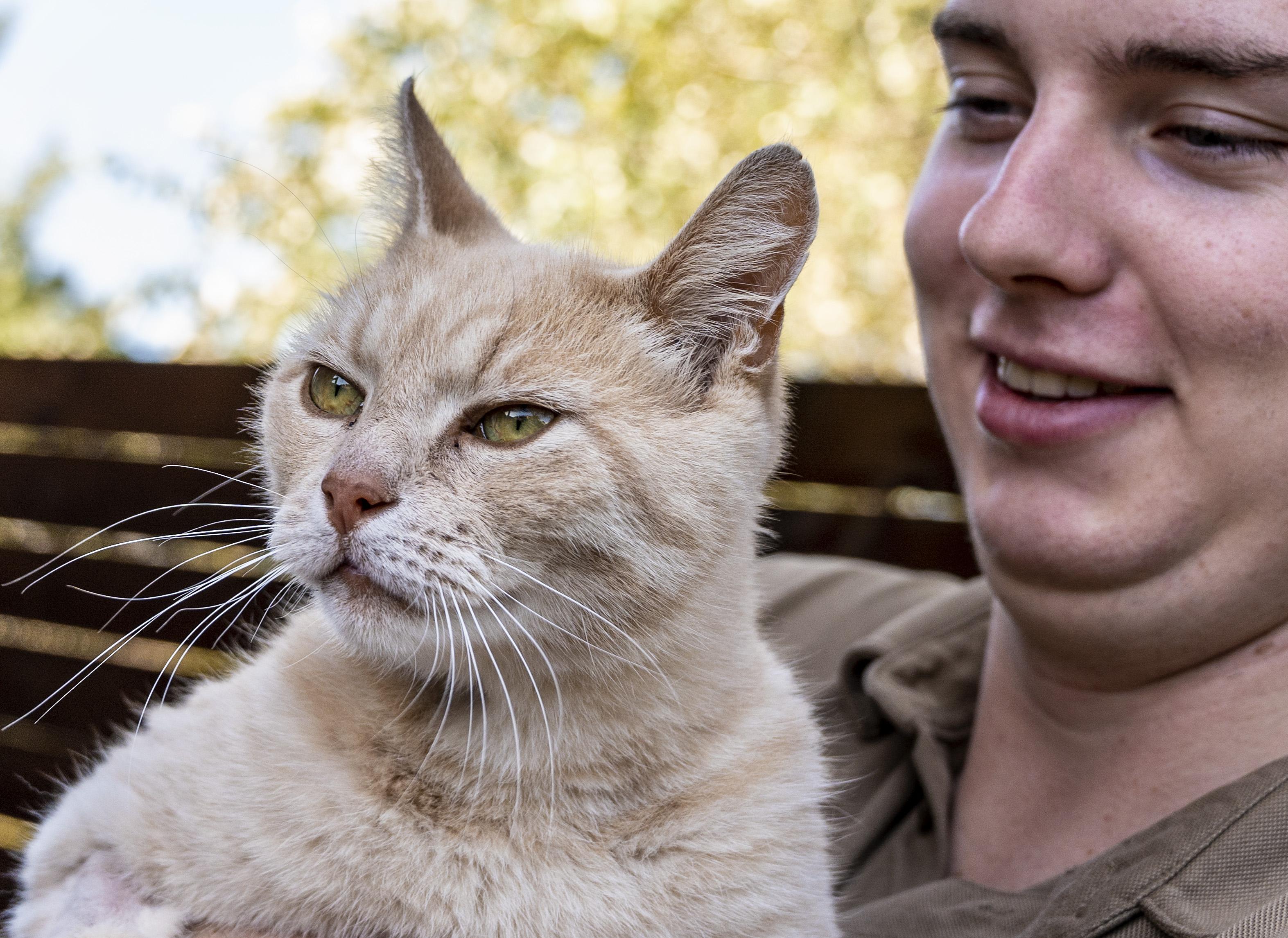 Doodzieke kater Sjors is inmiddels weer de oude, politie vermoedt dat Zandvoortse katten moedwillig zijn vergiftigd