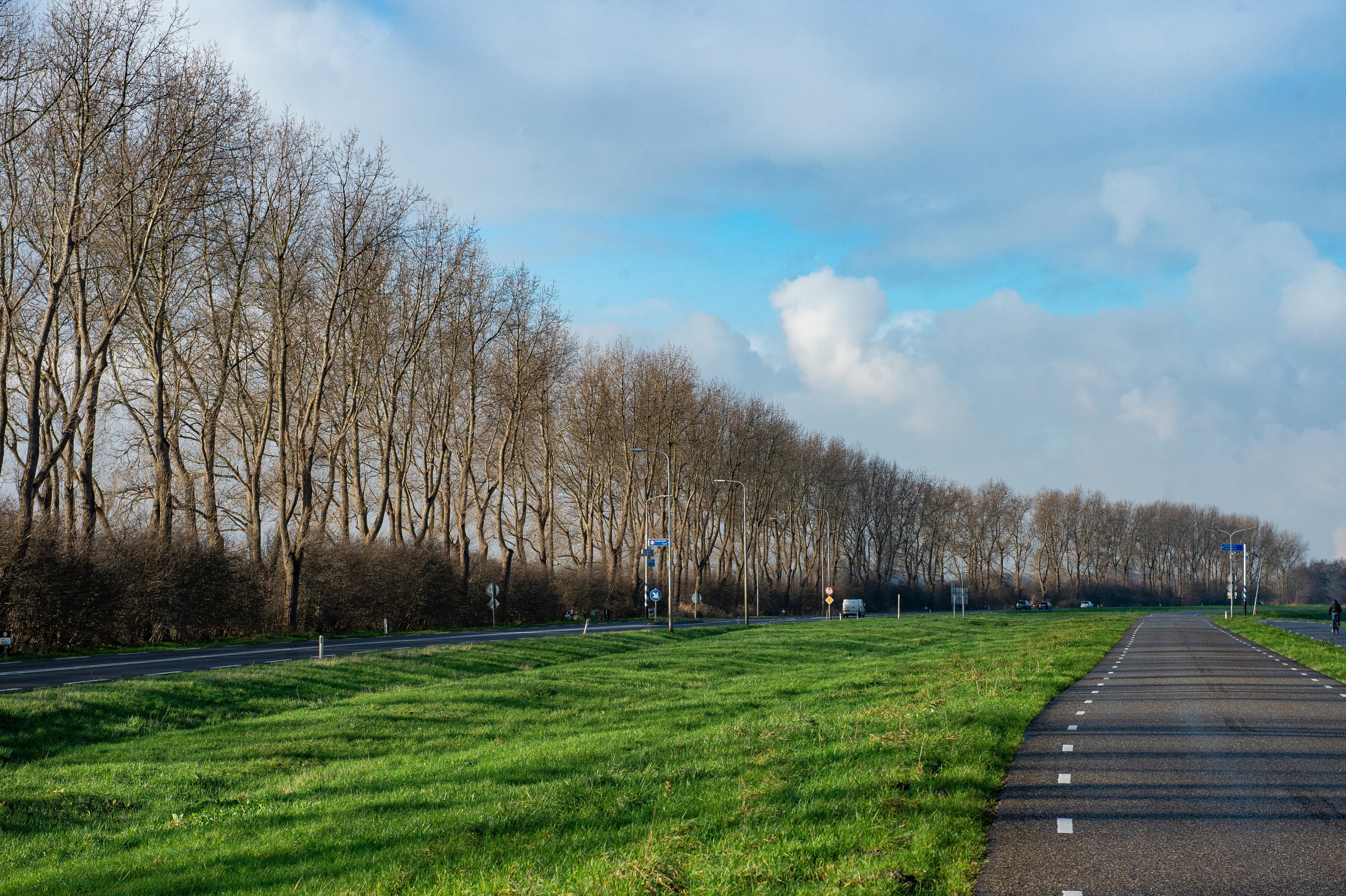 Ontzetting over kap 245 markante bomen langs het Noordzeekanaal. Groen Zaans wil gedegen onderzoek naar bomen en ecologie