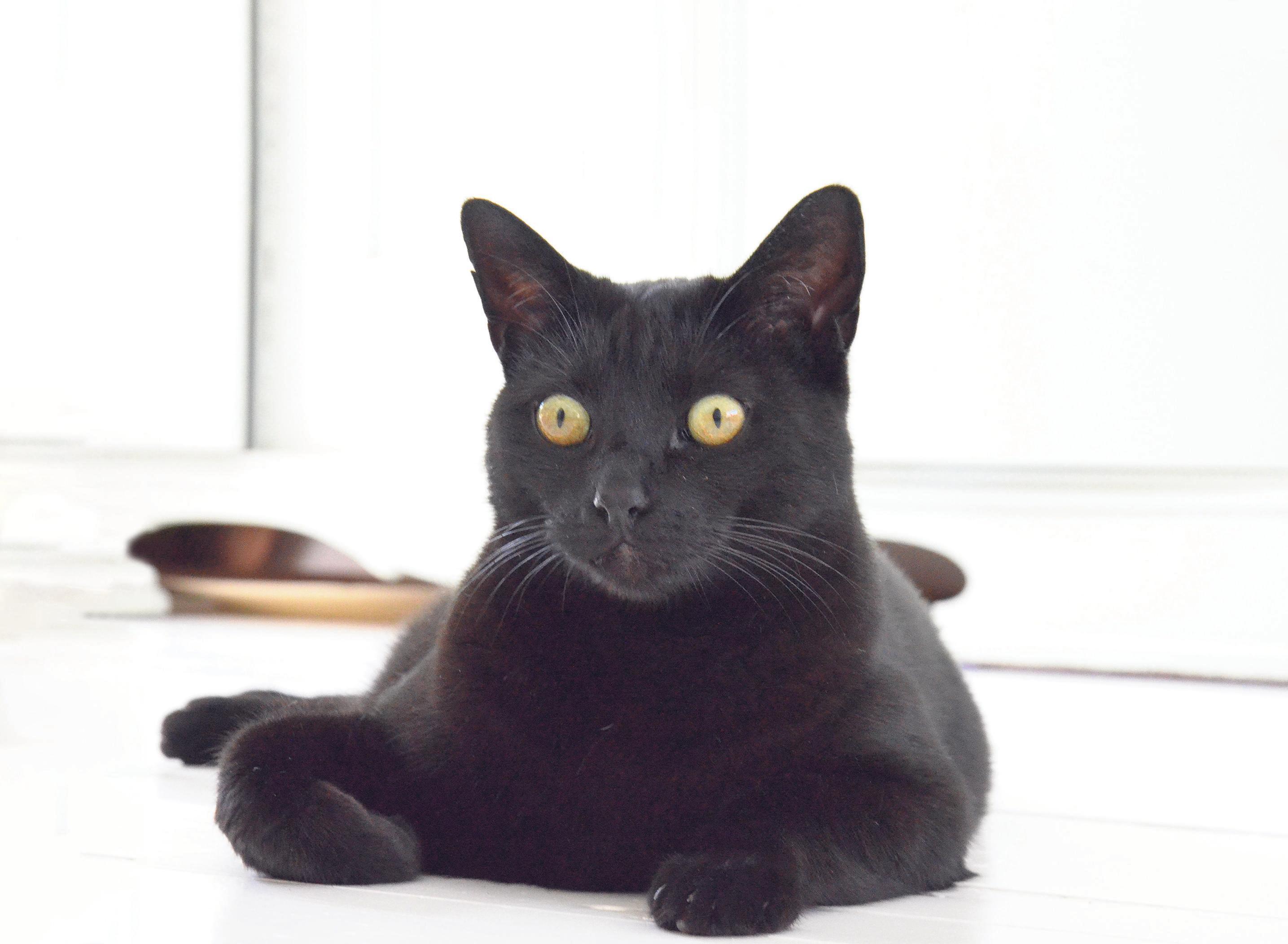 Katten vergiftigd in Zandvoort, een van de slachtoffers in kritieke toestand