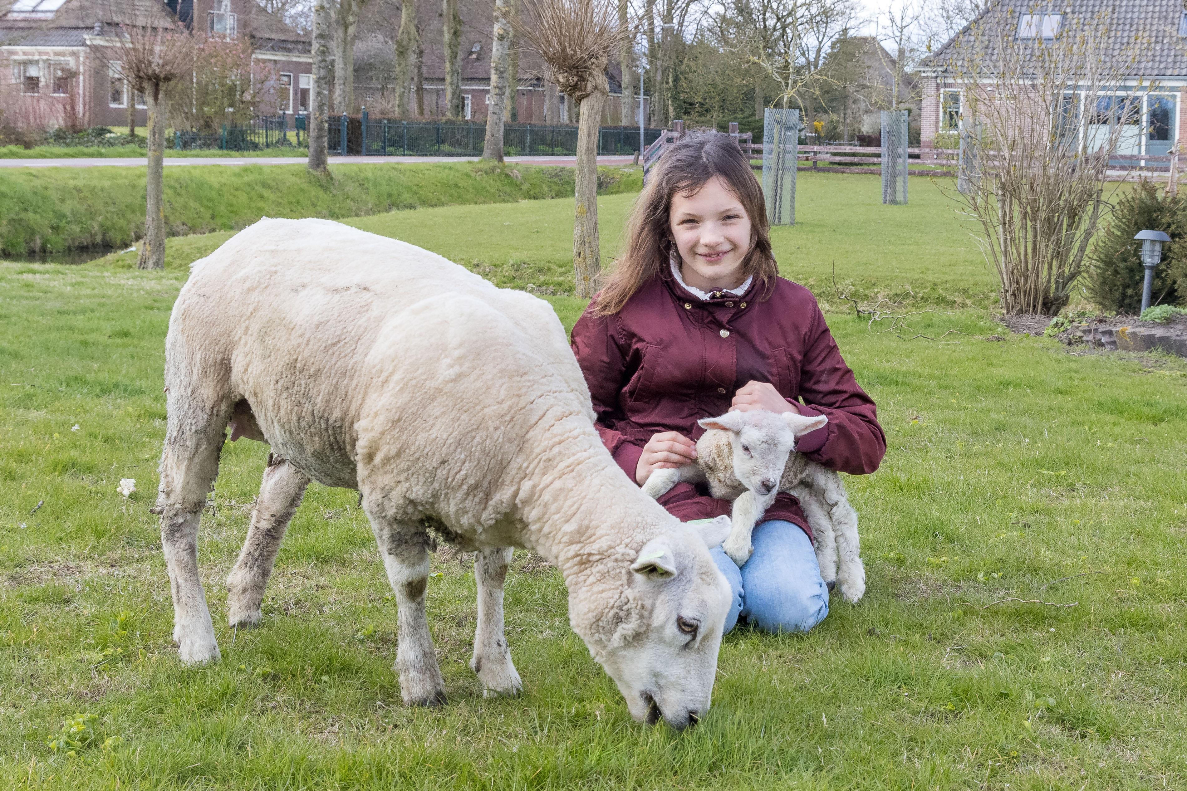 Een jaar geleden werd ze als potlammetje nog vertroeteld in een achtertuin in Spanbroek. Nu is schaap Wolly zelf moeder. 'Het is een meisje en we noemen haar Lolly'