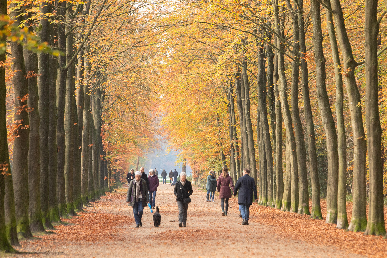 Bossen rond Baarn en Lage Vuursche verreweg populairste en drukste recreatiegebieden van de provincie Utrecht; 2,25 miljoen bezoekers in 2019