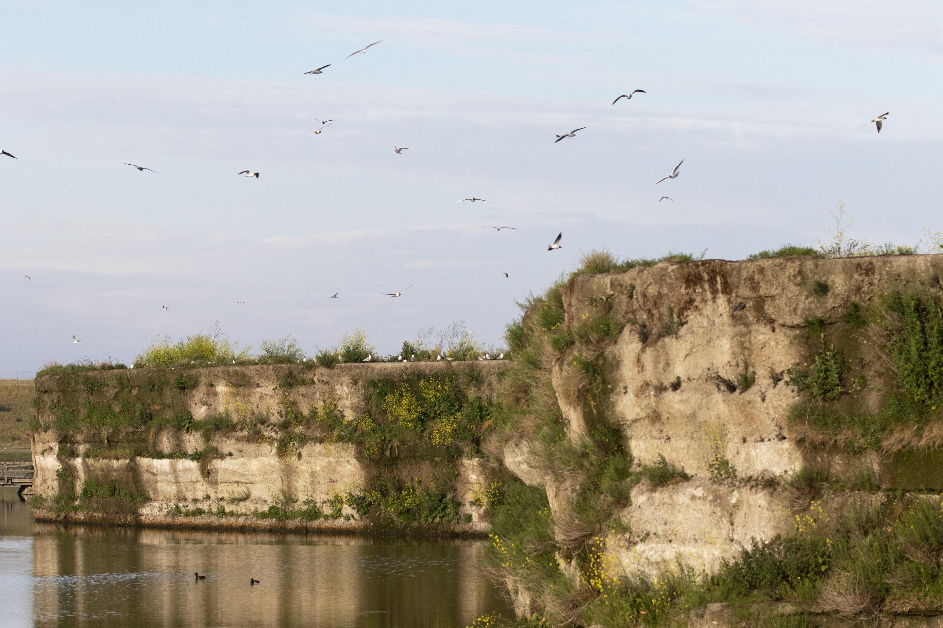 Oude brandtrap wordt karkas van uitkijktoren bij de enige vogelrots in Nederland. Op tien meter hoogte genieten van onbekommerd vogelleven, veilig voor de vos