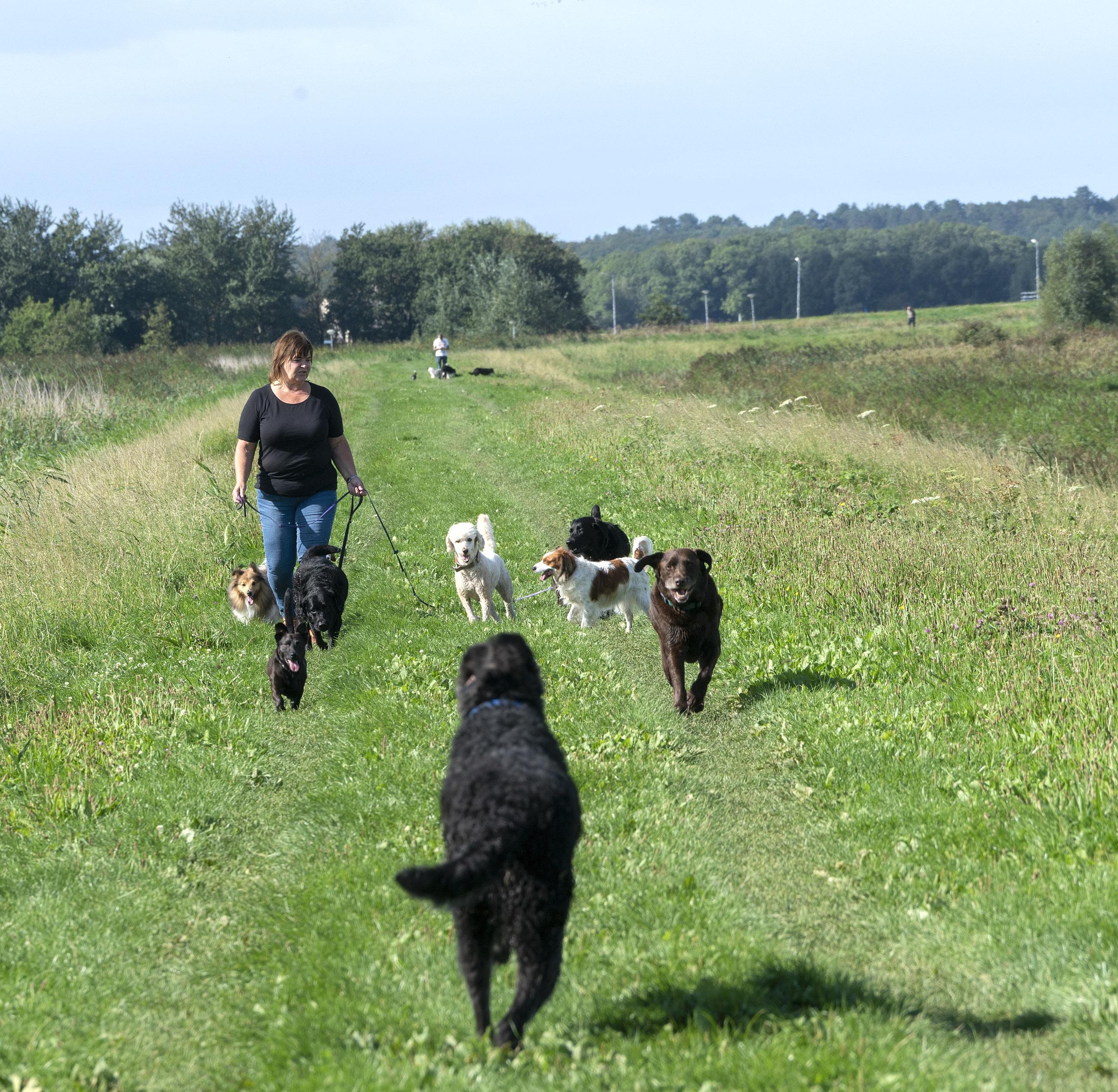 De wereld kan niet zonder hondenuitlaatservice. 'Mensen worden bang als andere honden aan hun hond gaan snuffelen. En ik word ook weleens uitgescholden'