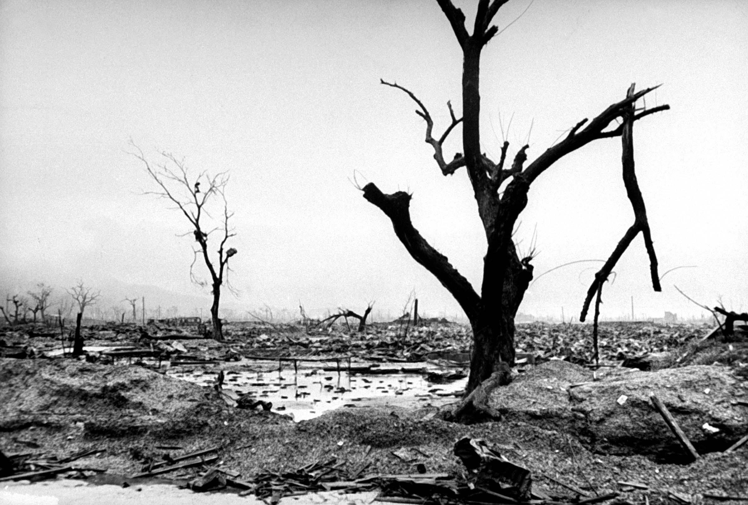 Bomen tegen bommen: Green Legacy Hiroshima Inititative vraagt aandacht voor blijvend gevaar kernwapens