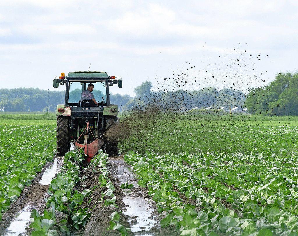 Agrariërs maken miljoenenschade op. De gewassen verzuipen, en dat zal vaker gebeuren. 'Met zulke plotselinge, niet te voorspellen clusterbuien zullen we toch moeten leren leven'