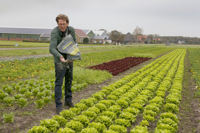 Red de wereld met je achtertuintje. Strooi een paar zakken olivijnzand over je grasveld en slurp CO2 uit de lucht. 'Dé manier om onze kinderen een goede toekomst te geven'