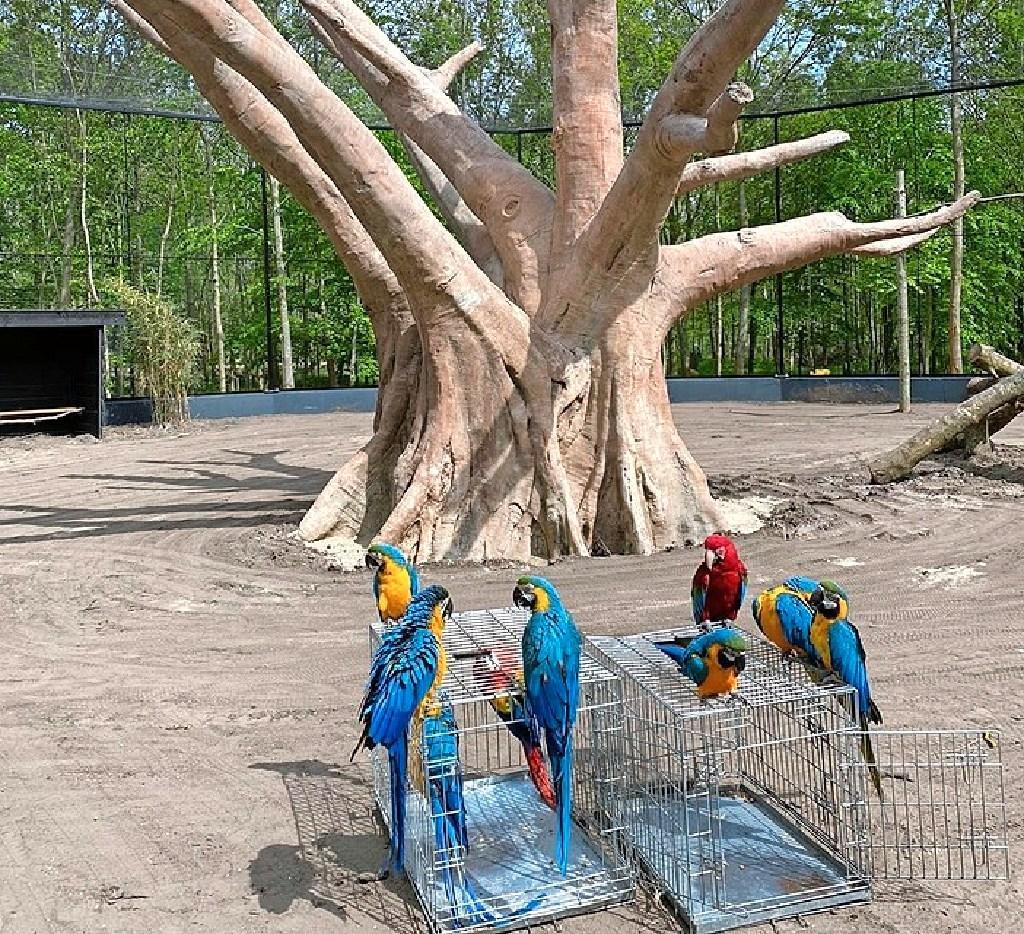 In de overlevingsstand en schade proberen te beperken bij dierenparken in de Noordkop