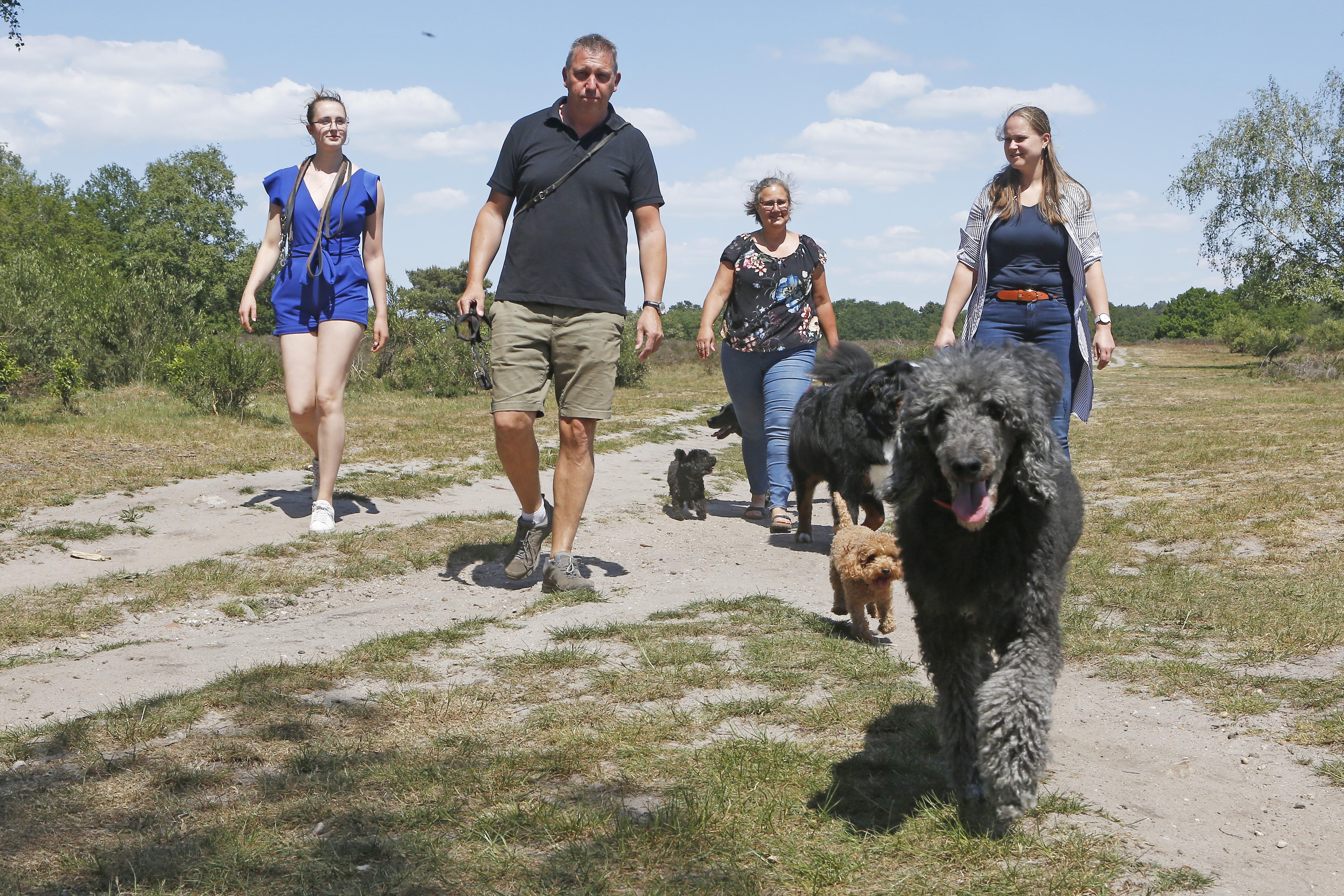Het is dringen geblazen: Steeds meer betaald honden uitlaten, maar steeds minder ruimte daarvoor