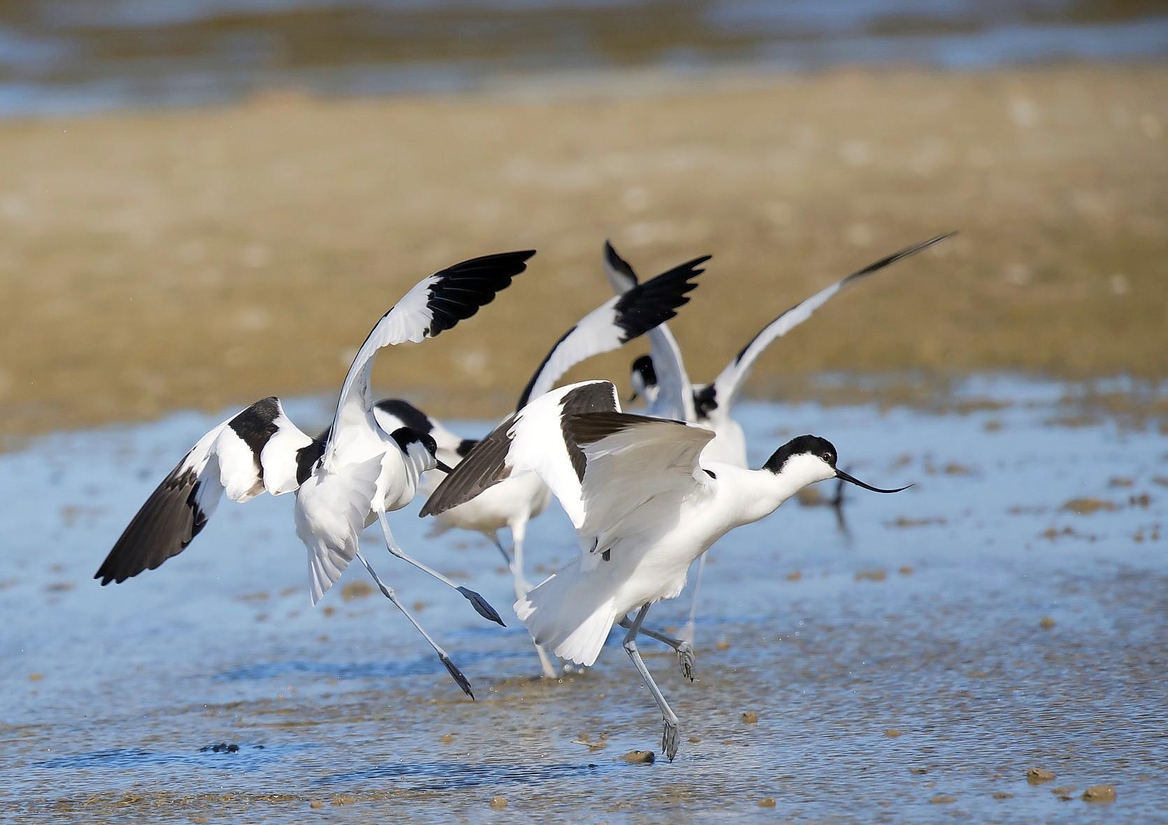 De natuur redden door grond te kopen? Zoals bij het Balgzand en de duinen tussen Den Helder en Callantsoog? Burgers hebben er oren naar. Actie van Landschap Noord-Holland gaat als een speer