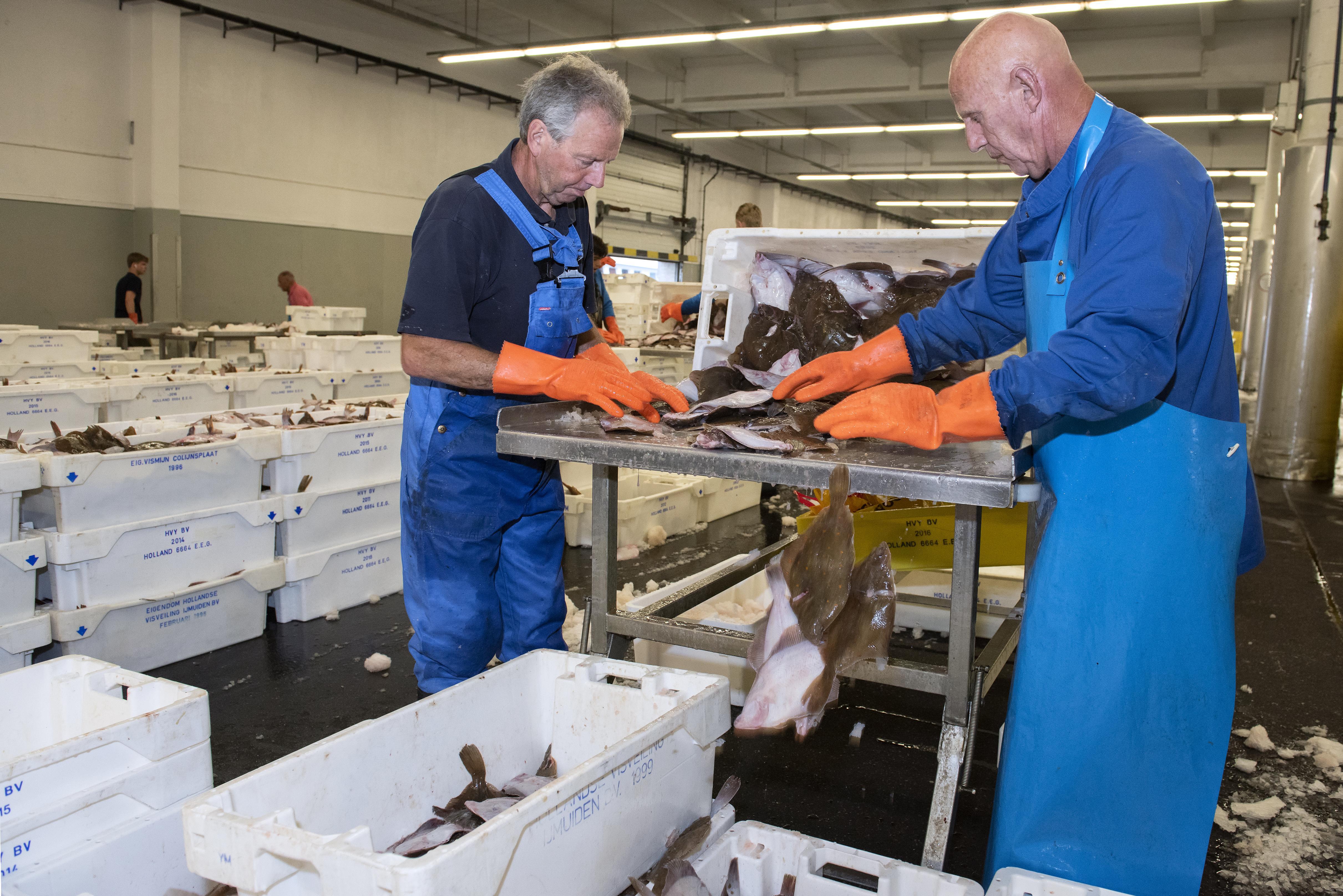 Ondanks coronacrisis boekte Zeehaven IJmuiden een redelijk goed halfjaar. Tegenover het wegvallen van de cruisevaart staat een hogere omzet uit visserijactiviteiten.