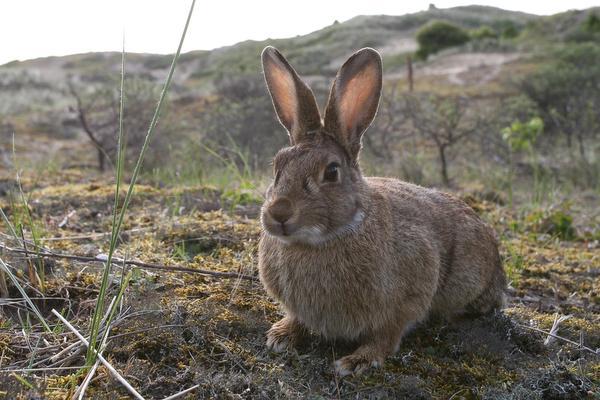 Uit de Tijd: Jacht op konijnen was exclusief recht adel