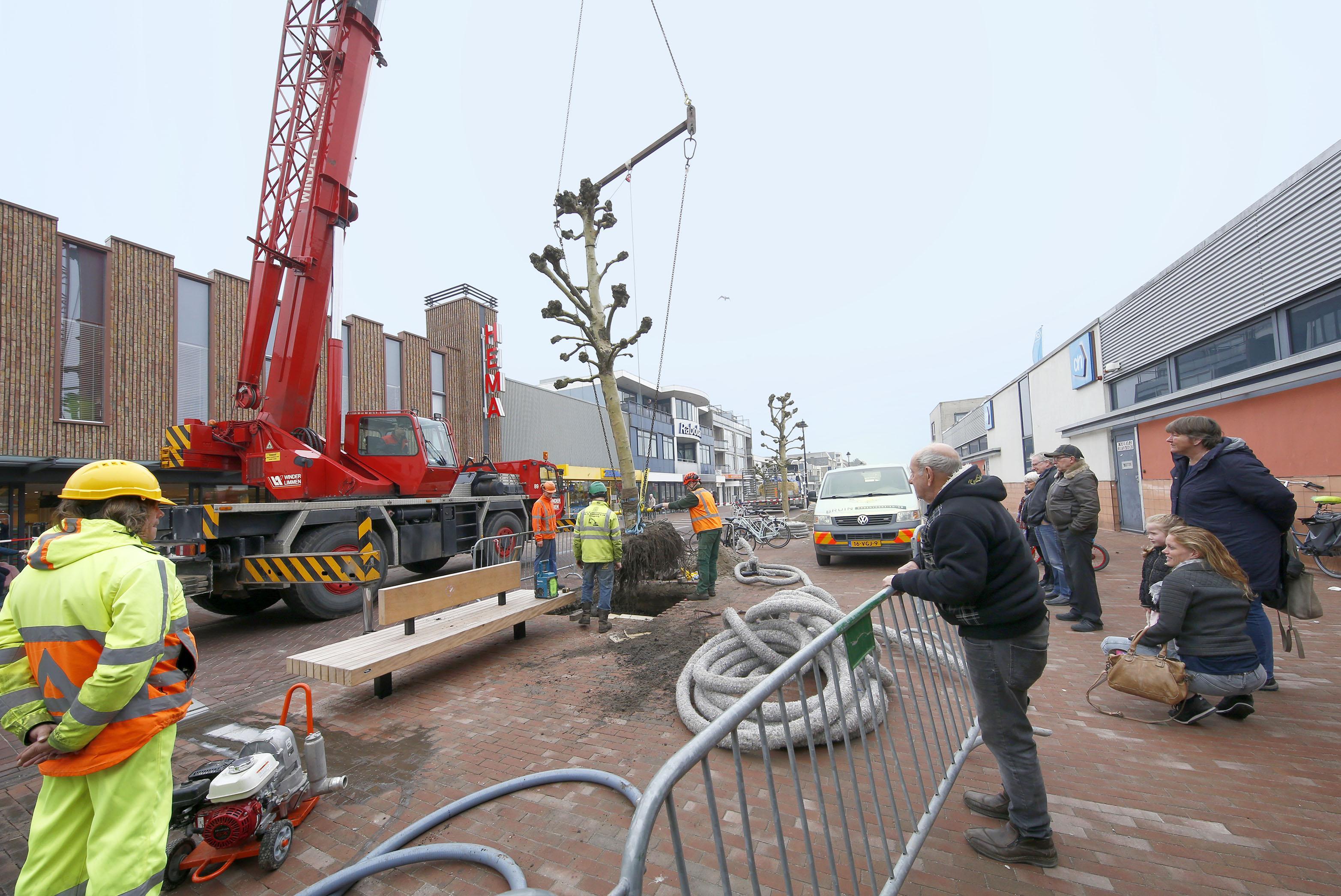Platanen terug in hartje Schagen na logeerpartij in nieuw Zijper 'Bomenhotel'