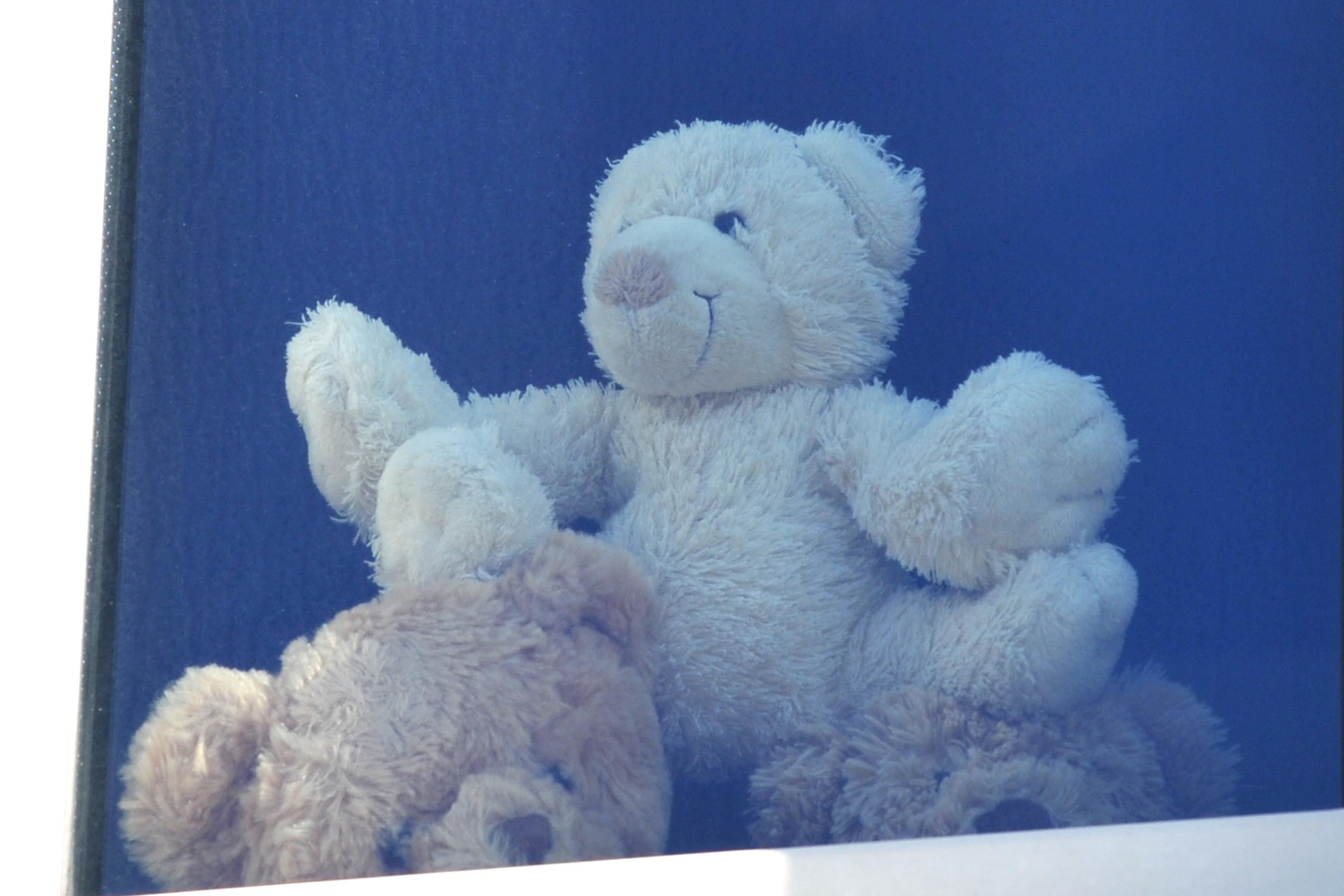 Overal duiken er teddyberen op achter de ramen. Kinderen op berenjacht tijdens coronacrisis