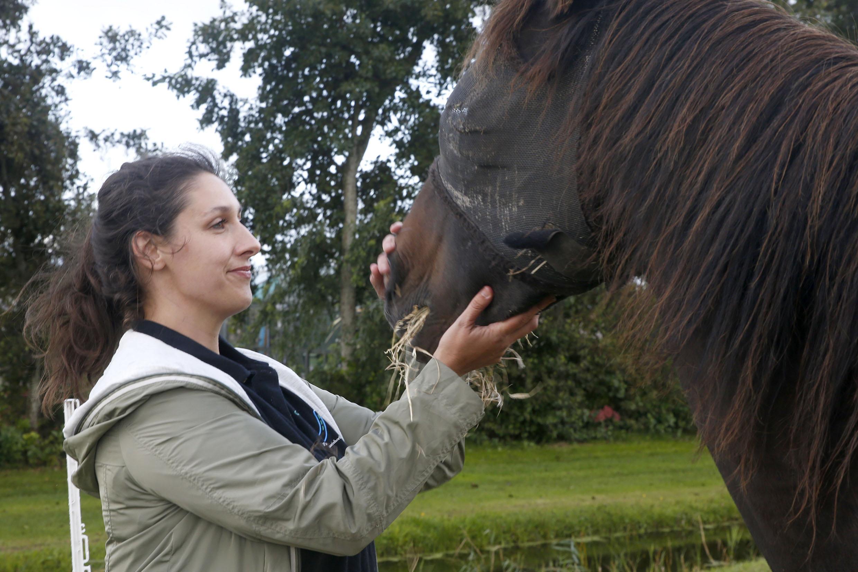 De zeven paarden van Tiny gaan vanuit 't Veld naar Andijk, naar de nieuwe locatie van de paardenopvang in Obdam