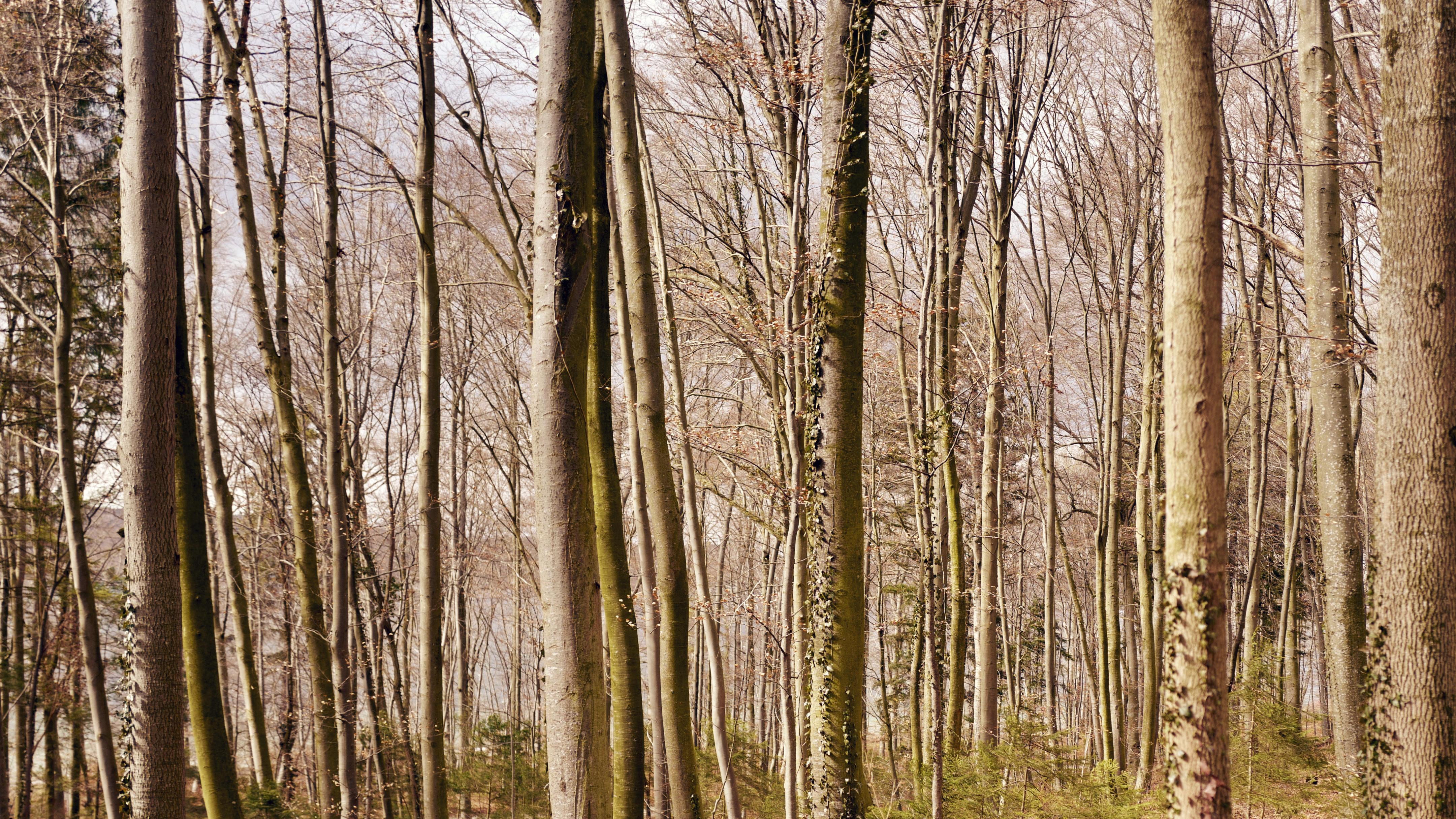 Tieners seks in het bos