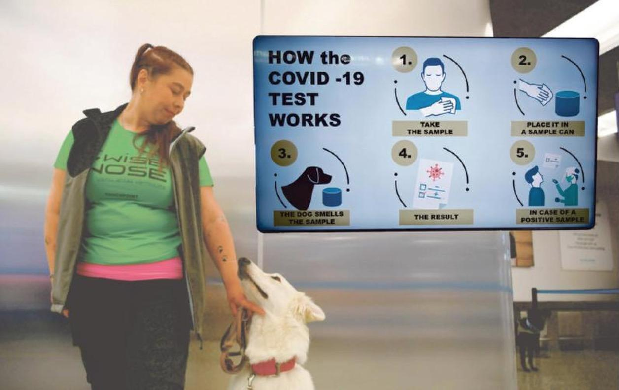 Aan corona zit een luchtje. Expert pleit voor inzet van detectiehonden bij het opsporen covidbesmettingen in verpleeghuizen