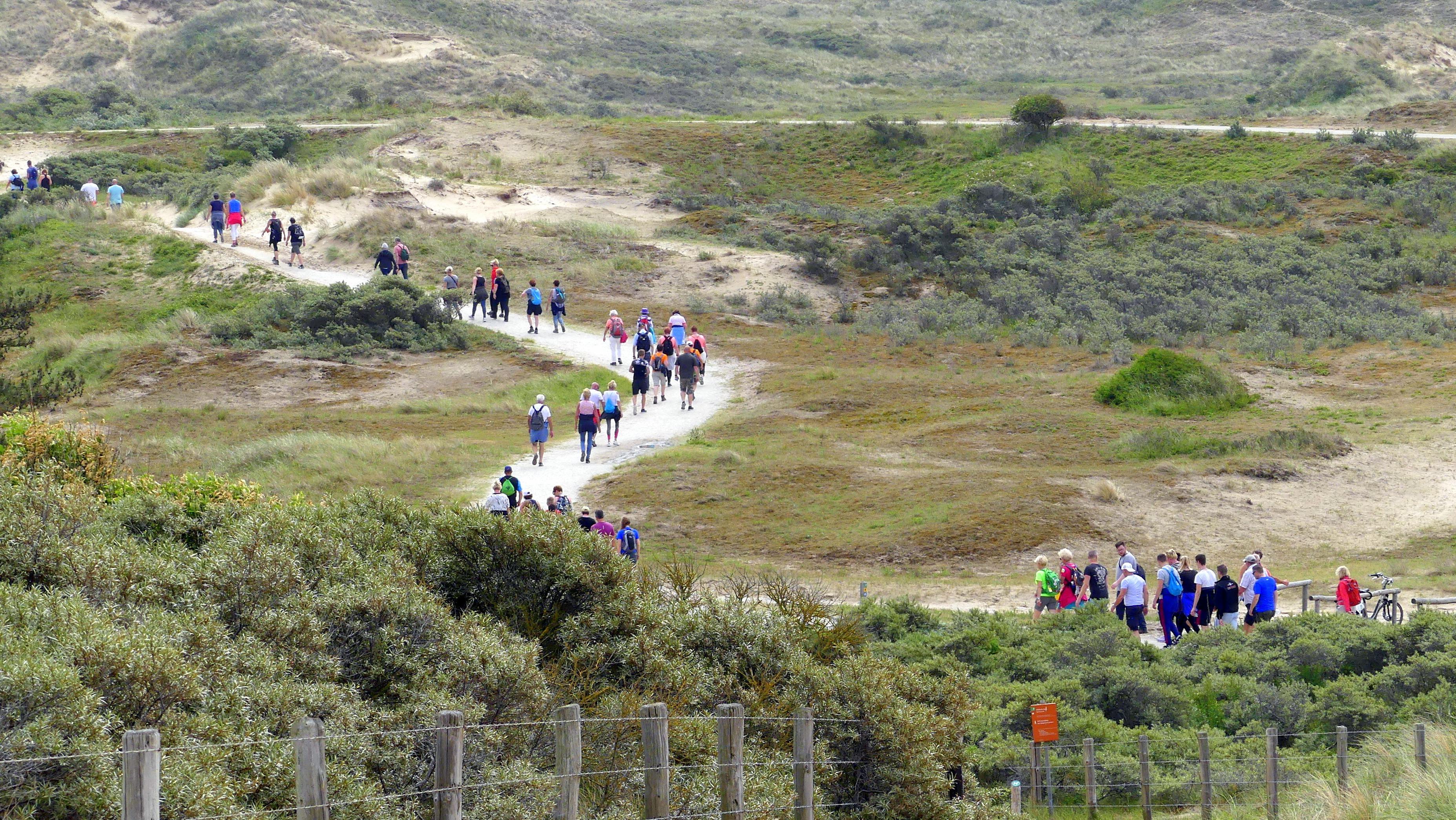 Duin- en Bollenstreek krijgt een wandelvierdaagse: 'Een wandelfeestje vier je samen'