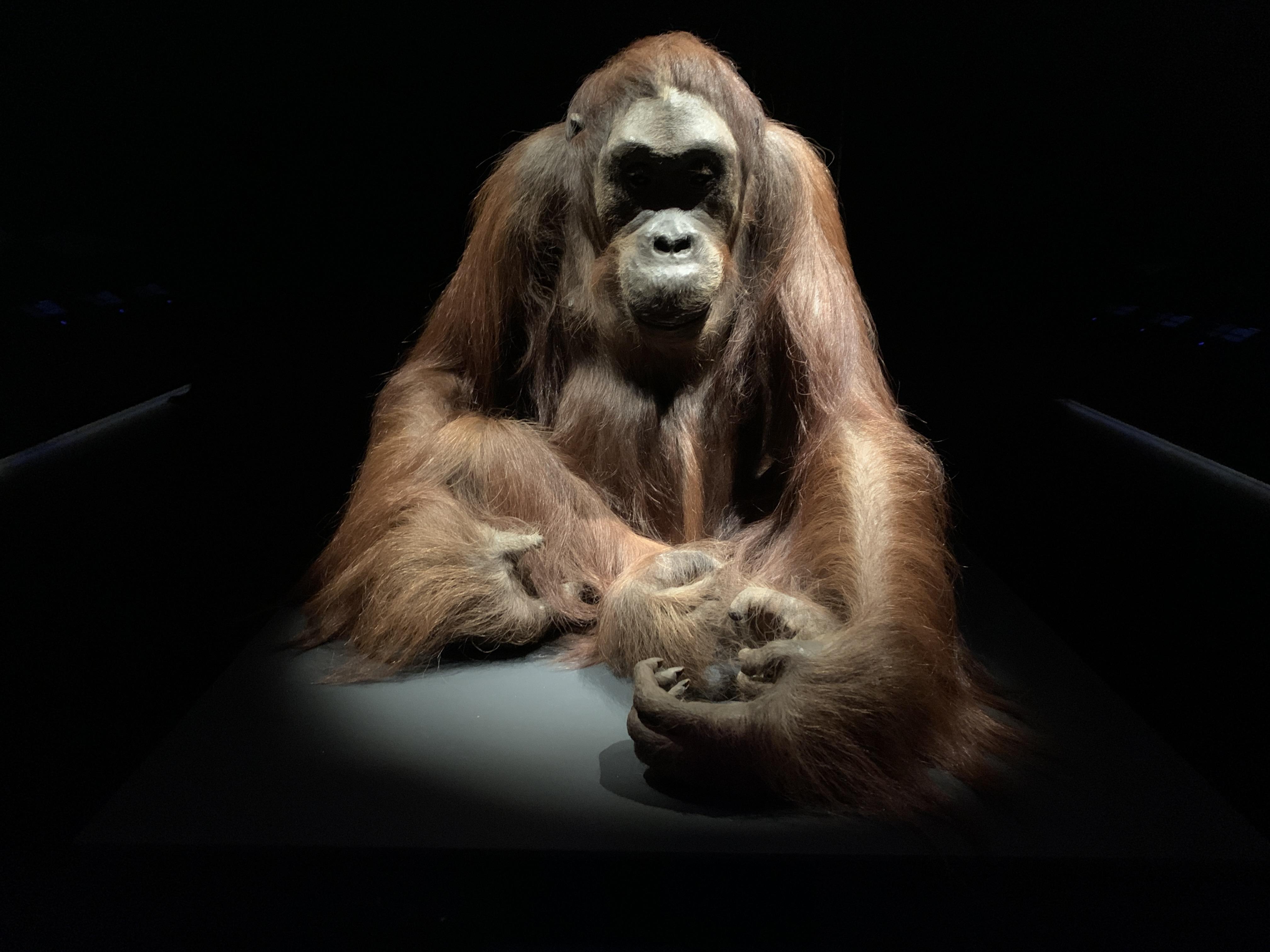 Tentoonstelling 200 jaar Naturalis: een parade van eeuwenoude toppers [video]