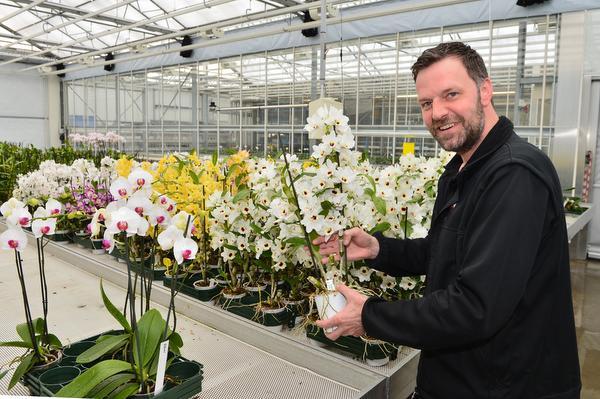 Gefopte orchidee bloeit hele jaar