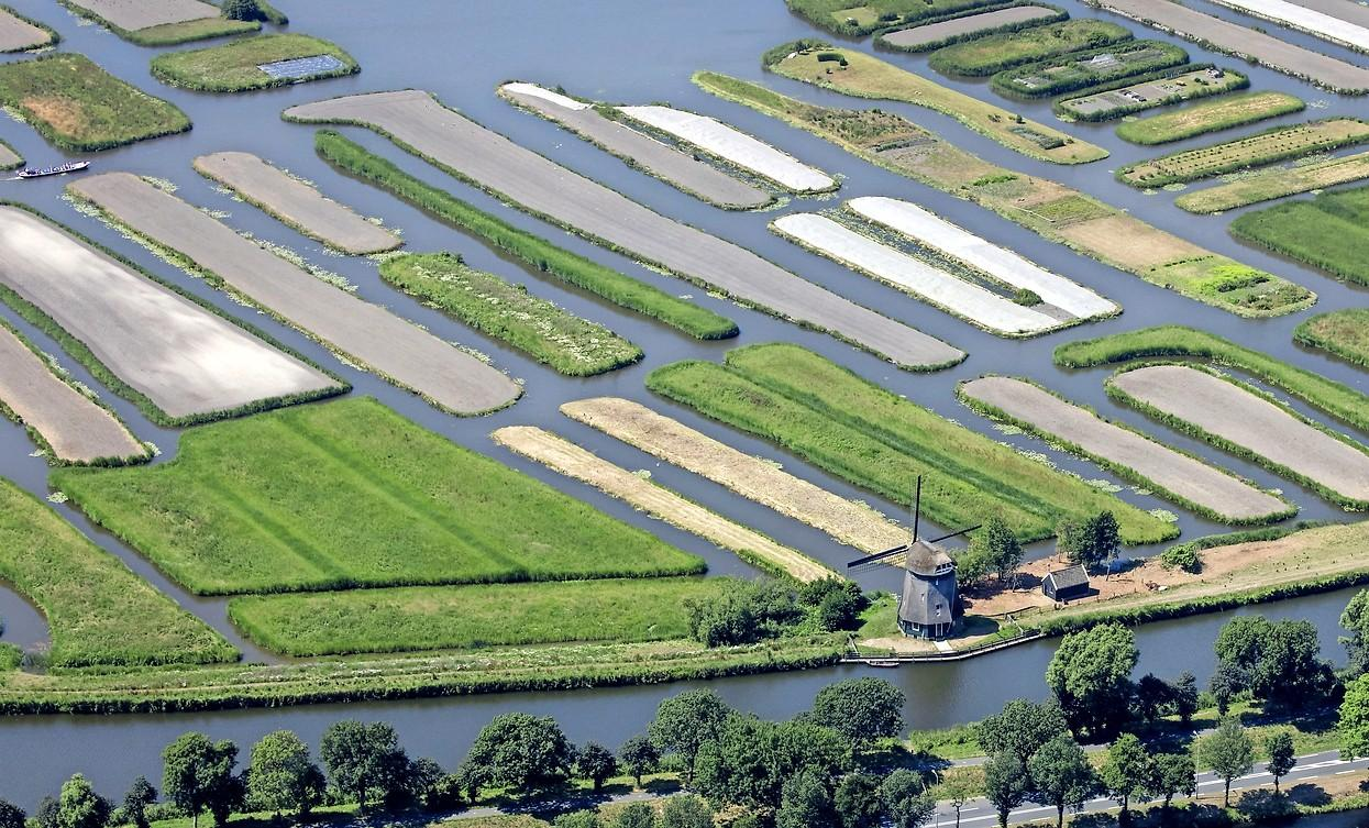 Oosterdelgebied ernstig aangetast door gravende Amerikaanse rivierkreeft. Maar hoe kan verdere schade worden voorkomen?