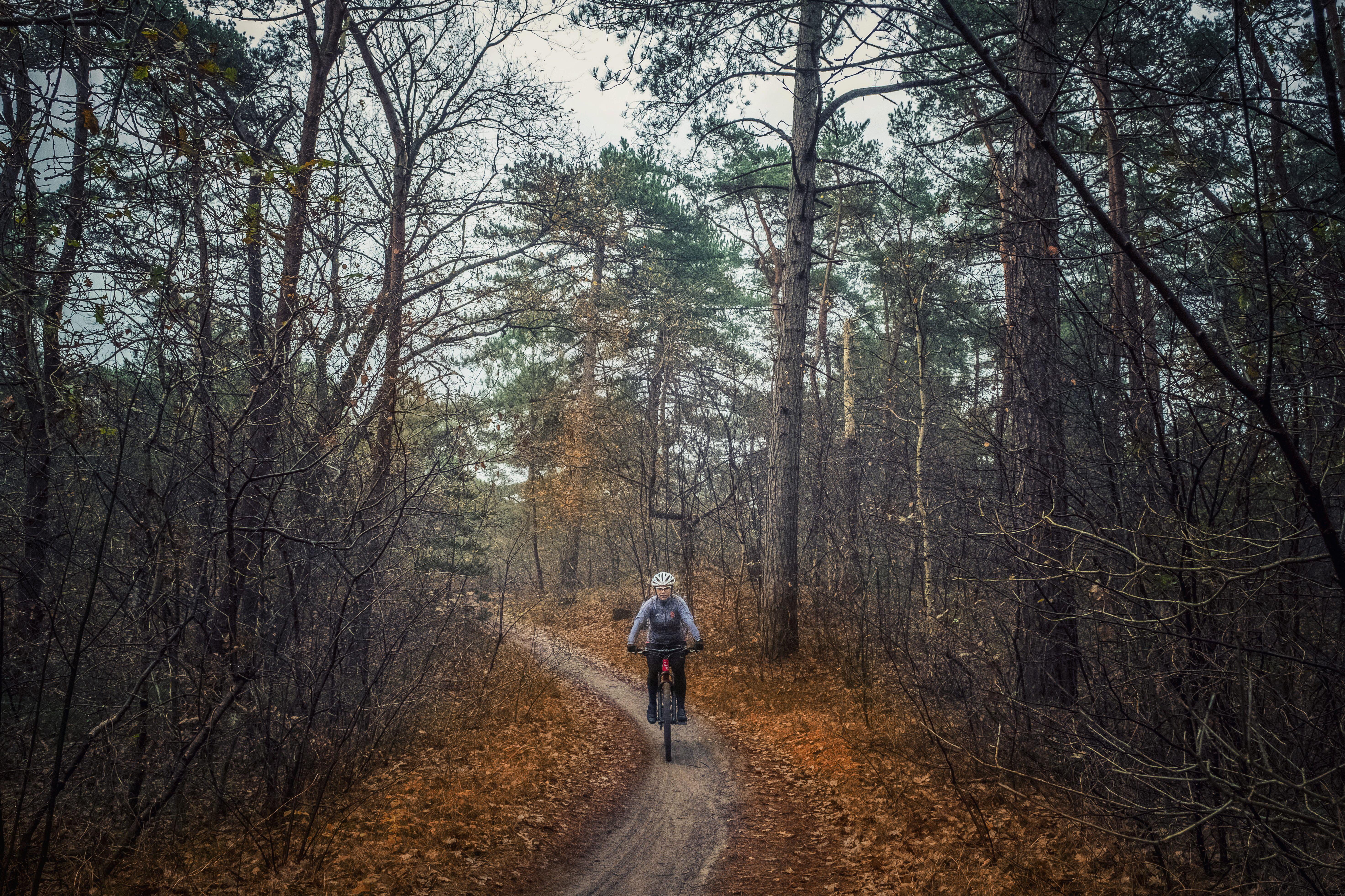 De gemeente Bergen verleent de vergunning voor het omstreden nieuwe mountainbikeroute in de Schoorlse Duinen